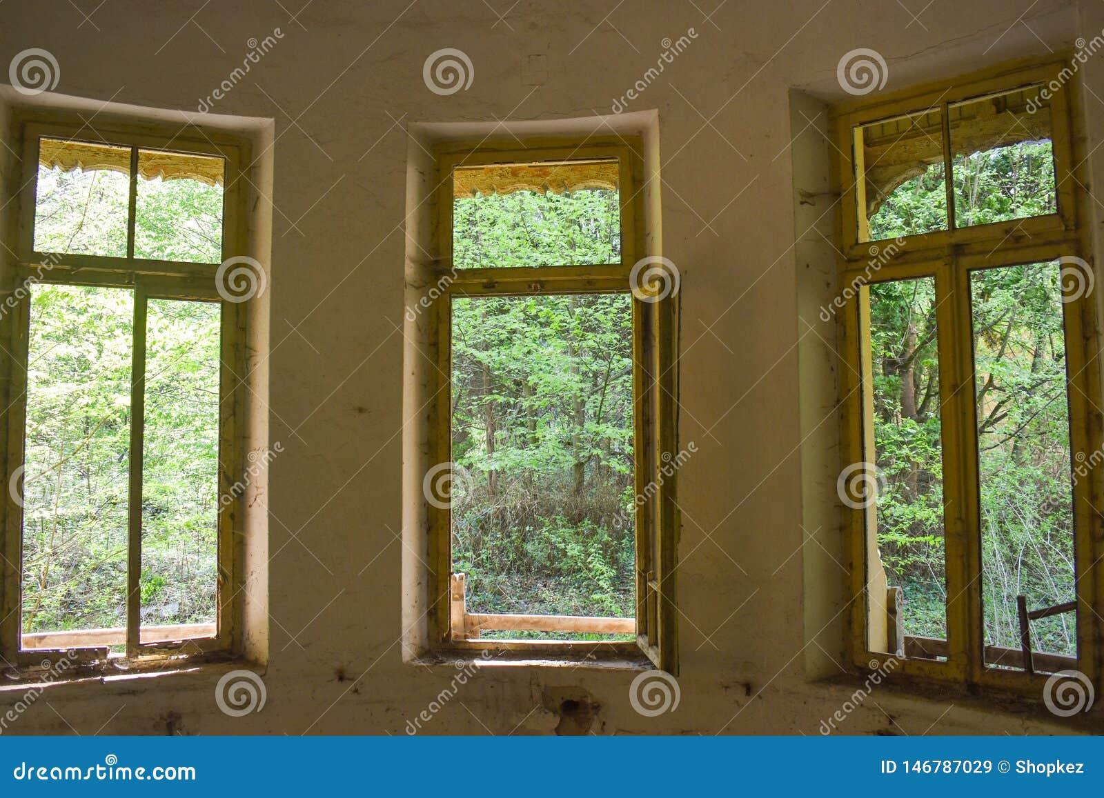 Осмотрите лес от интерьера получившейся отказ больницы