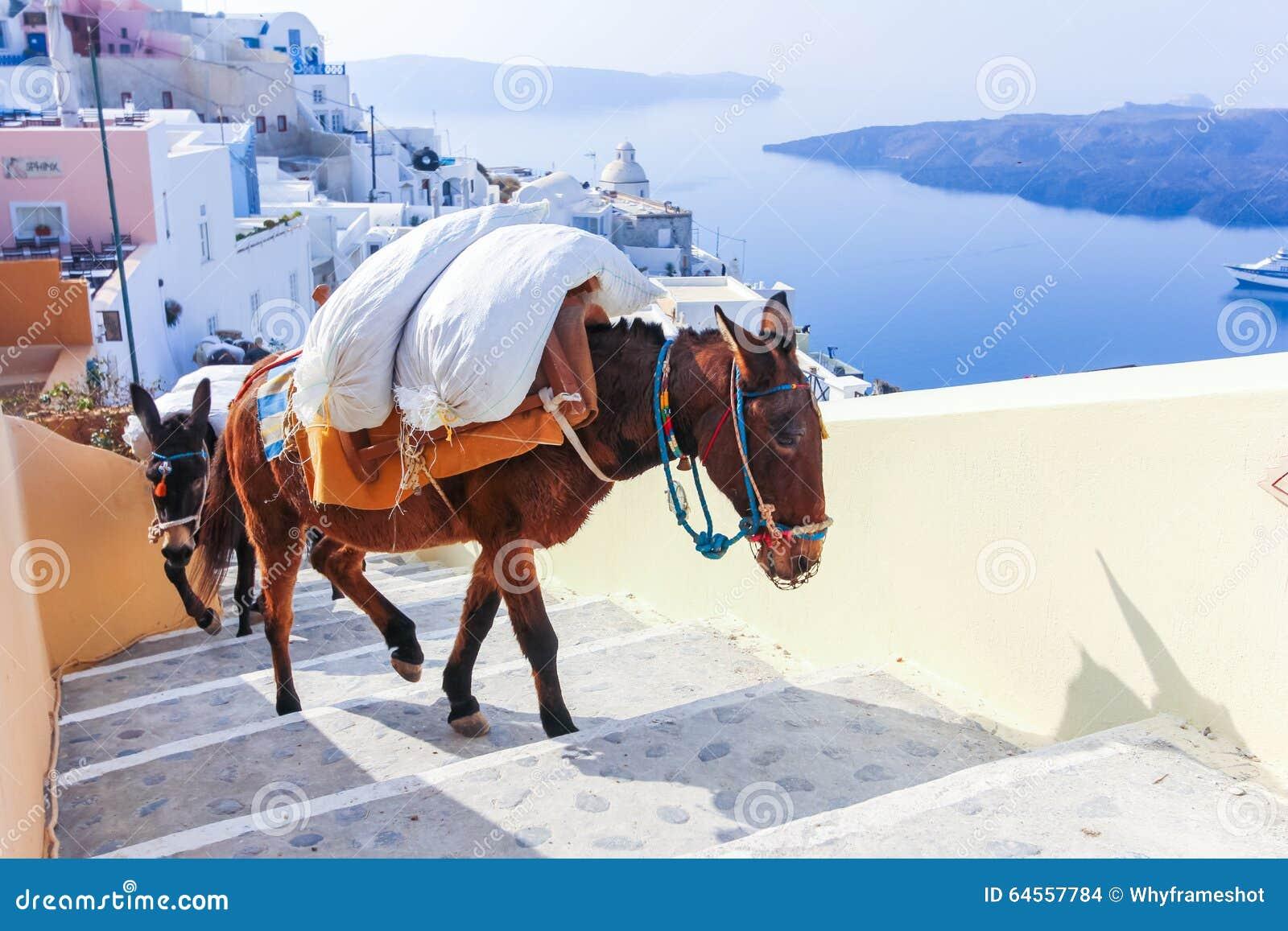 Остров Греции Santorini в ослах Кикладов