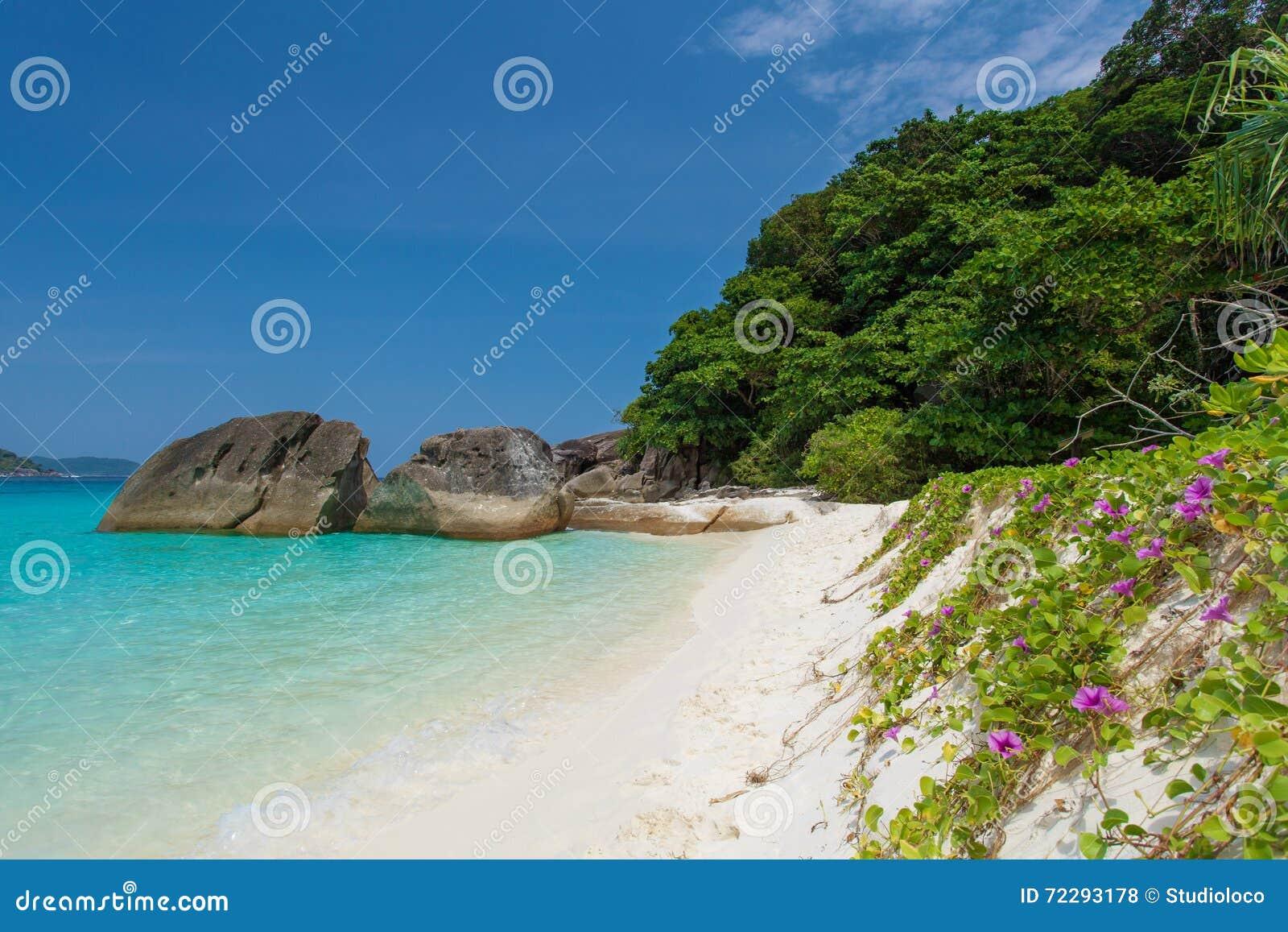 Download Остров Miang и завод Таиланд Pohuehue Стоковое Фото - изображение насчитывающей туризм, таиланд: 72293178