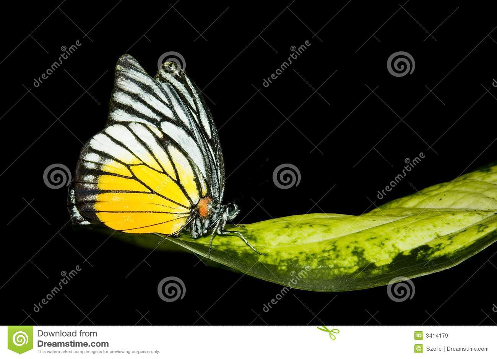 отдыхать разрешения бабочки