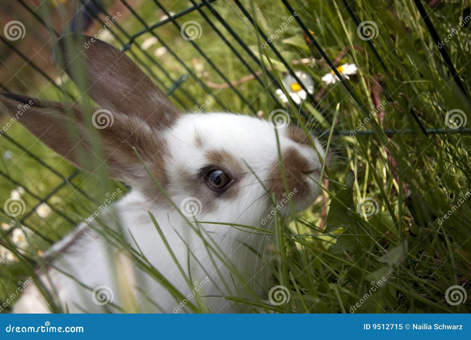 отечественные кролики молодые