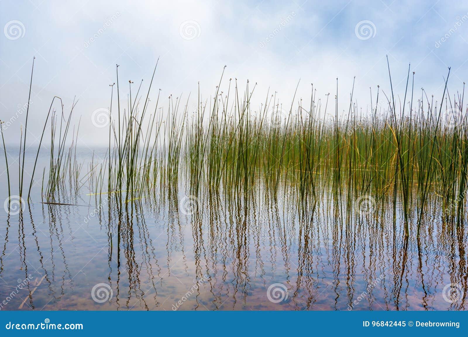 Отражая Tulies и туман на озере Мари