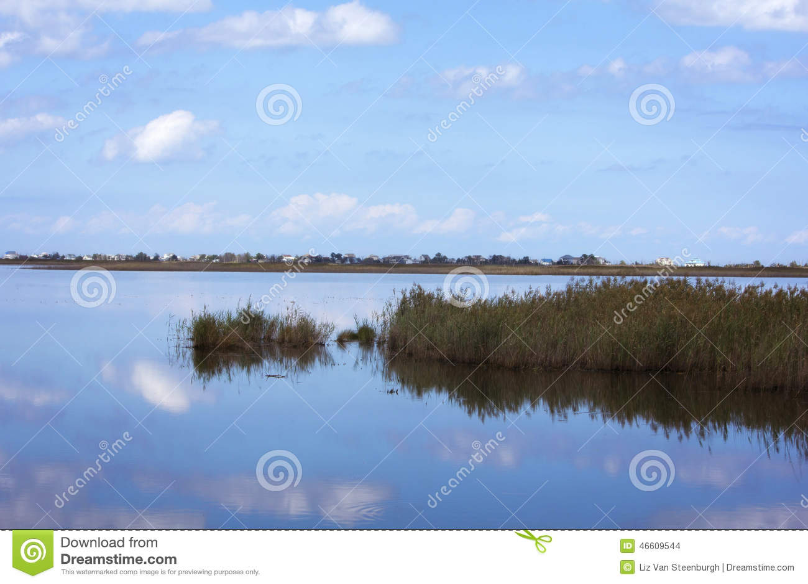 Отражение болота