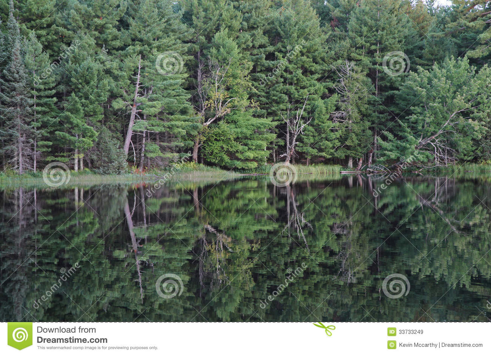 Отражение деревьев в озере