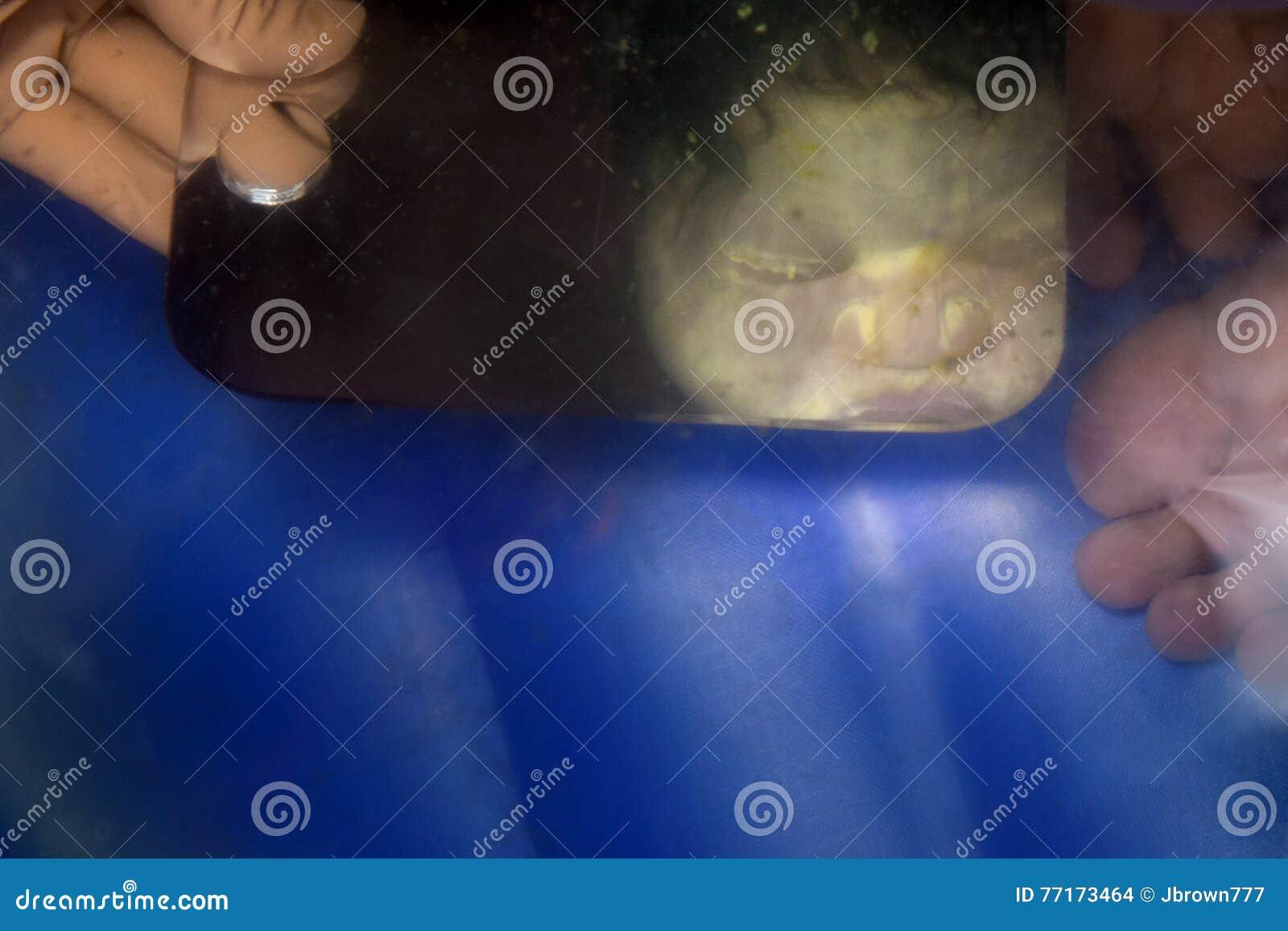 Отражение Baby& x27; сторона s по мере того как она вытекает от ее матери
