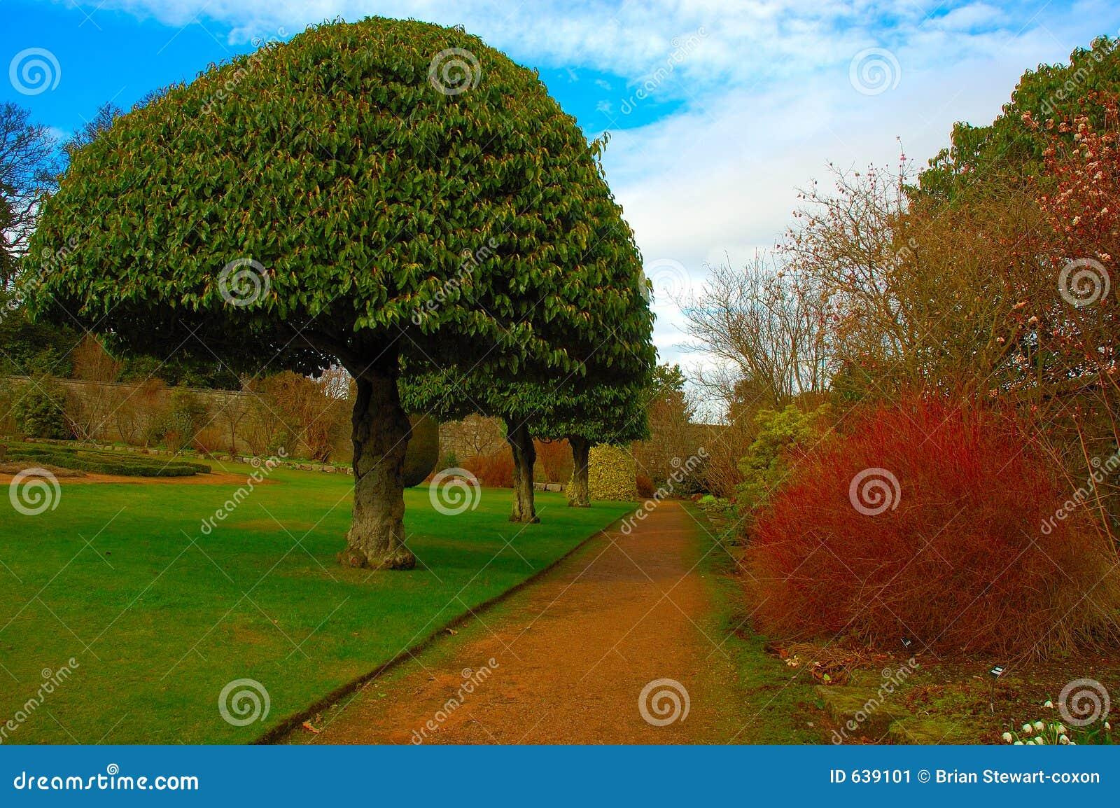 Download официально сад стоковое изображение. изображение насчитывающей тропа - 639101