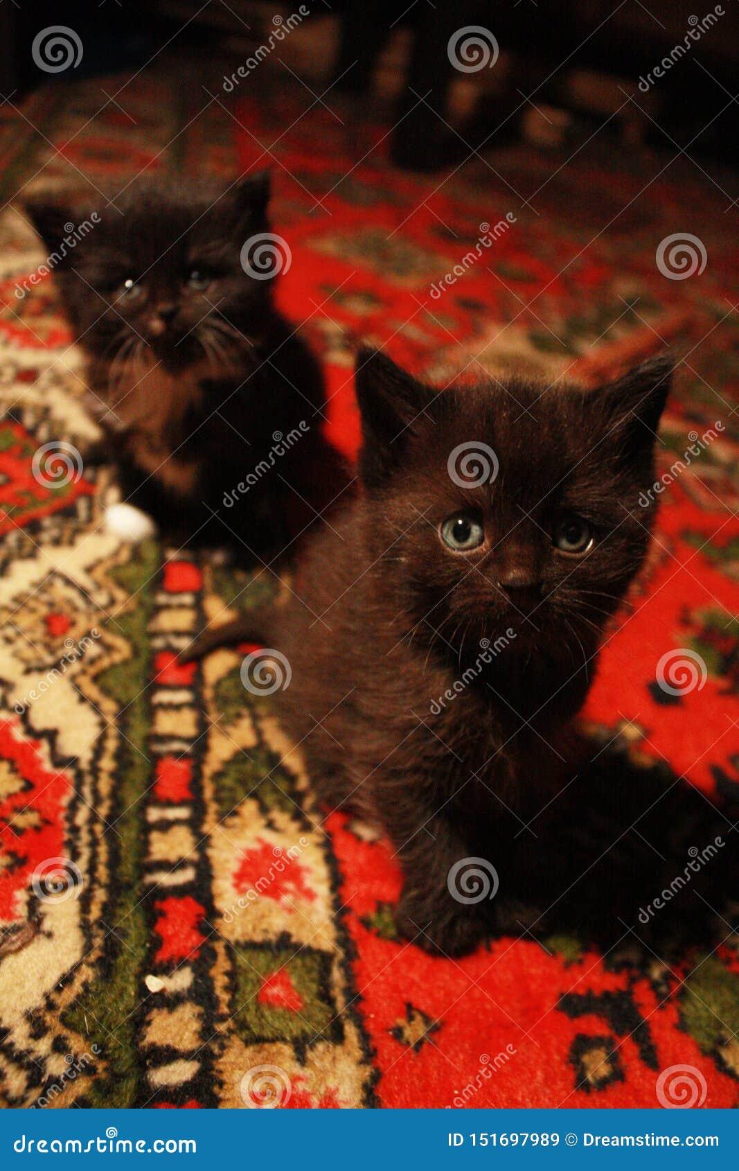 очаровывая любопытные котята