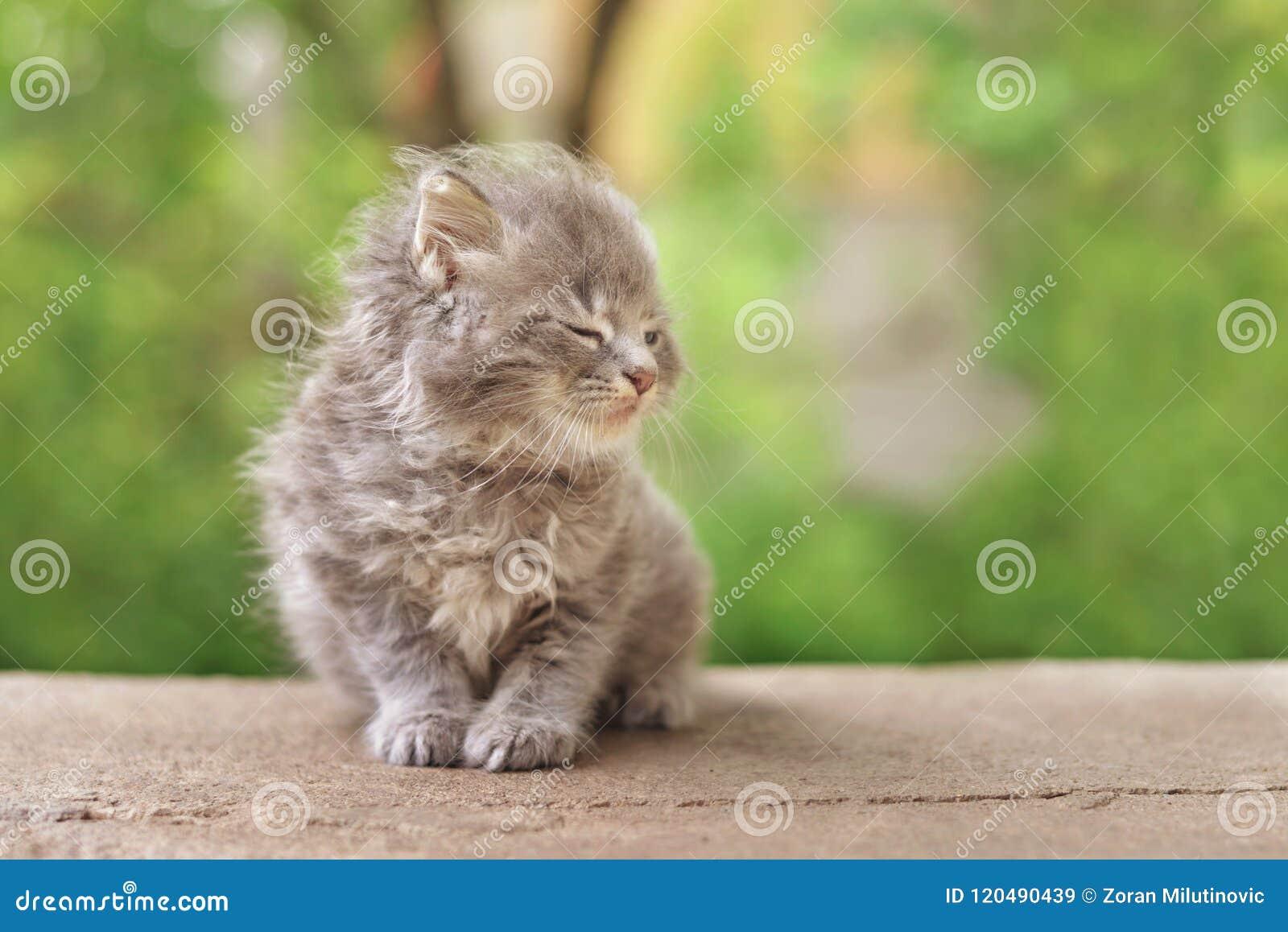 Очень милый пушистый котенок