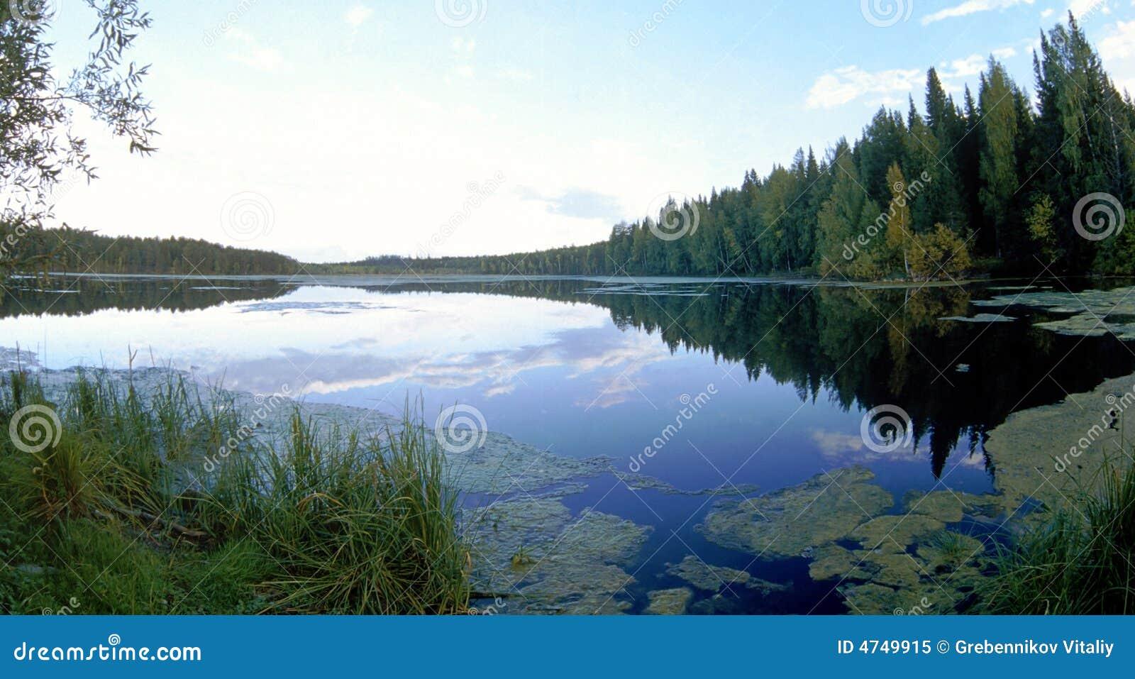 очистьте древесину воды озера