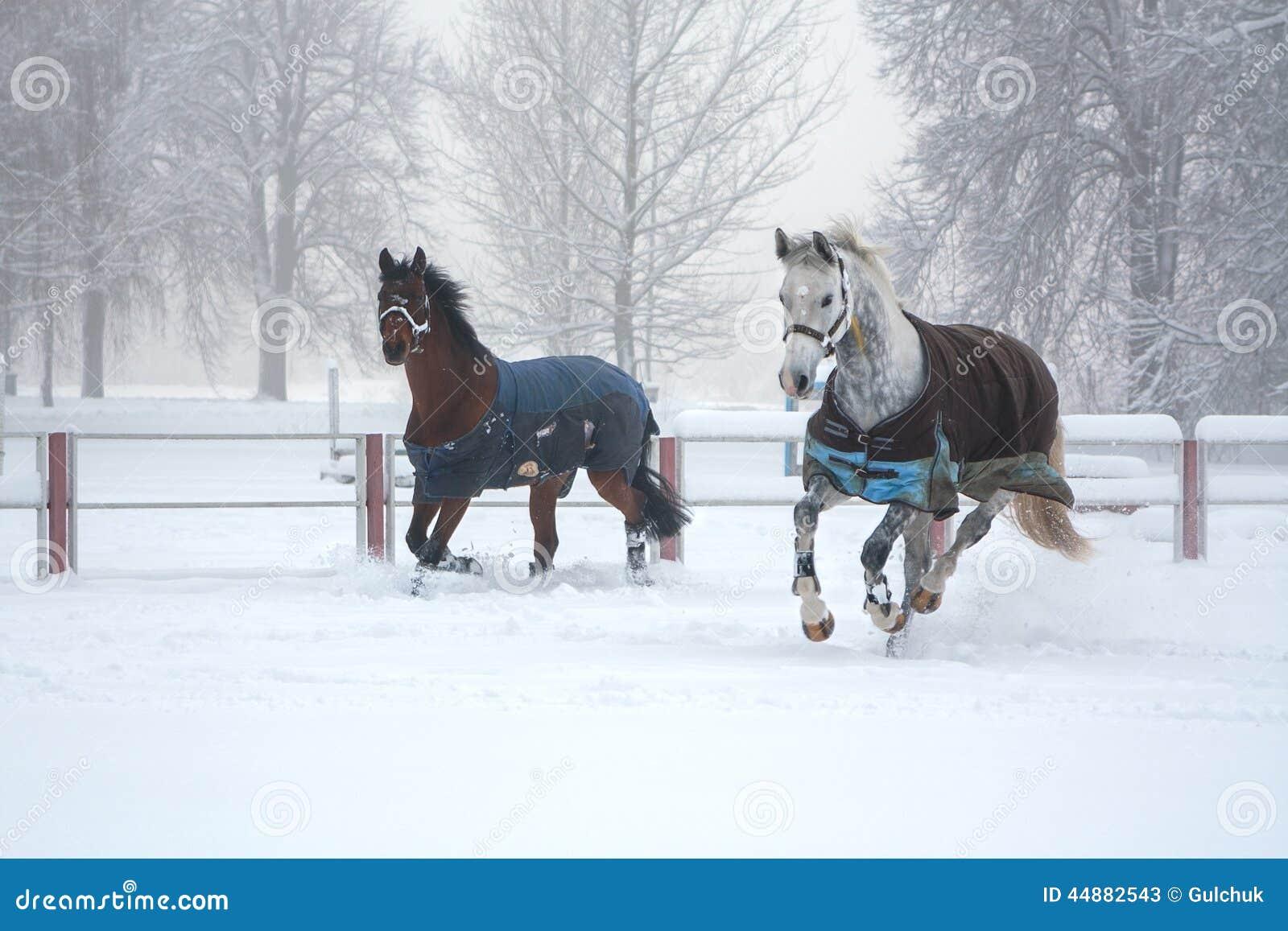 2 лошади бежать на утре снега туманном