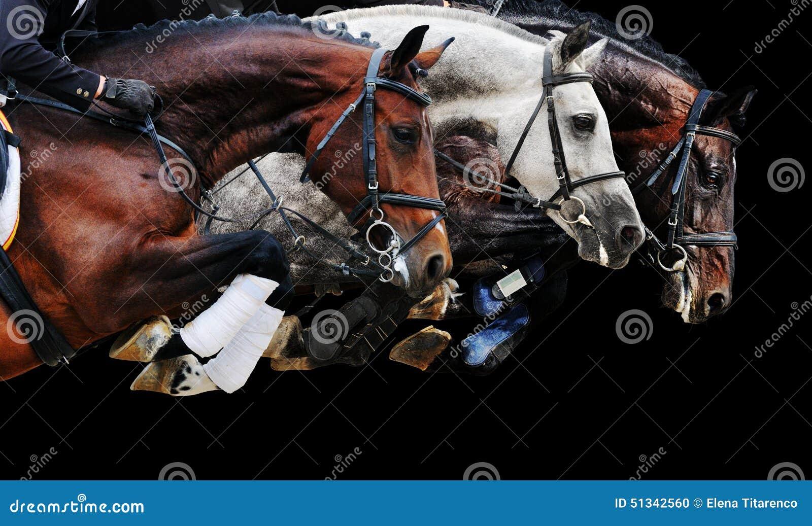3 лошади в скача выставке, на черной предпосылке