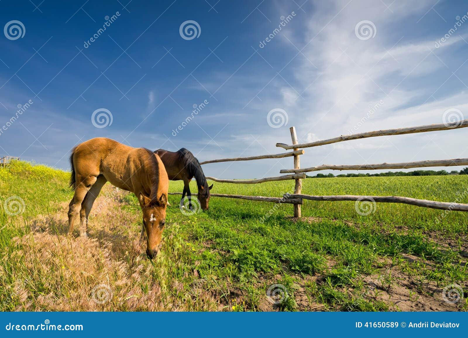 2 лошади пася в луге около загородки
