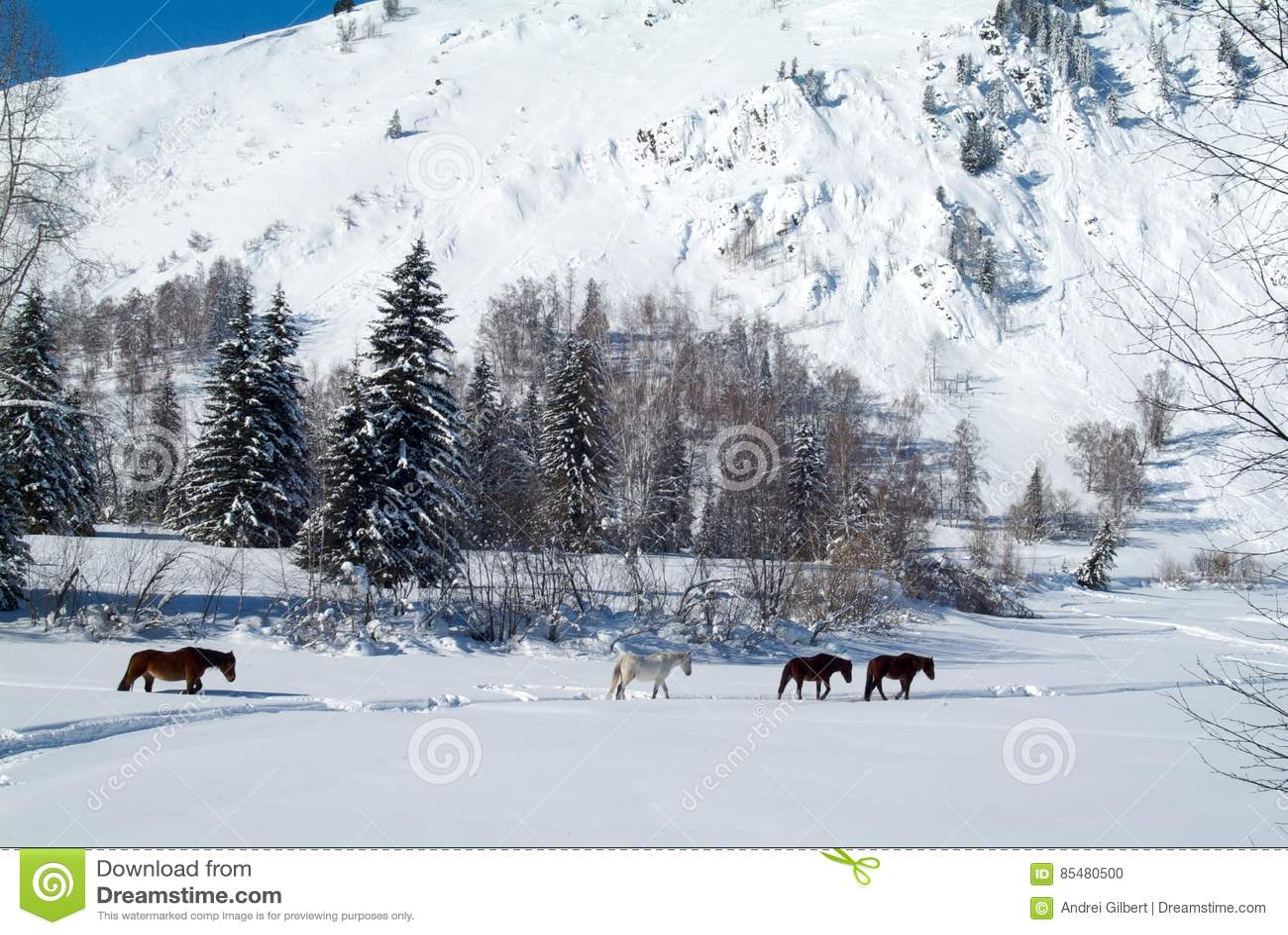 4 лошади приходят из замороженного леса