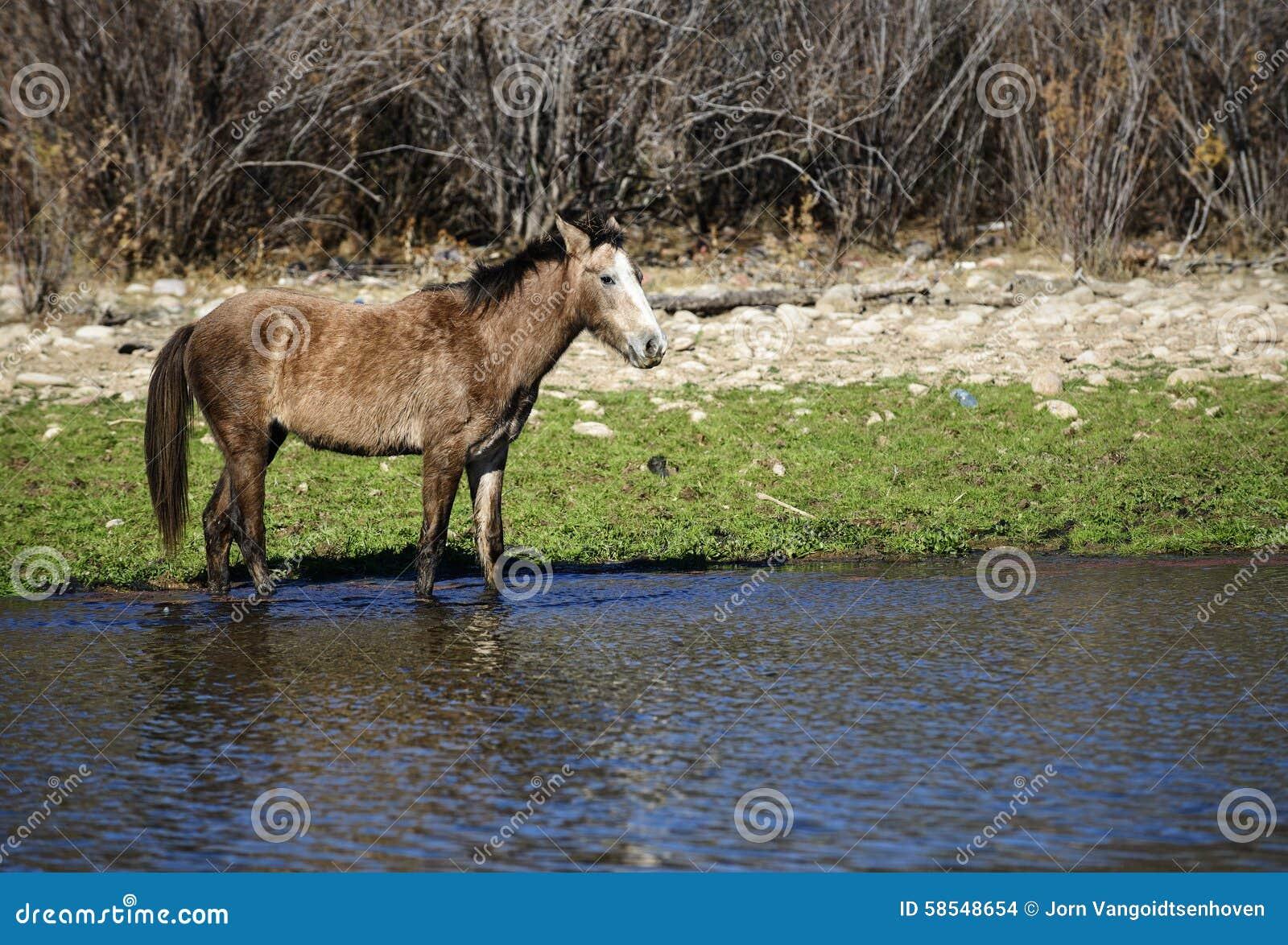 лошадь одичалая