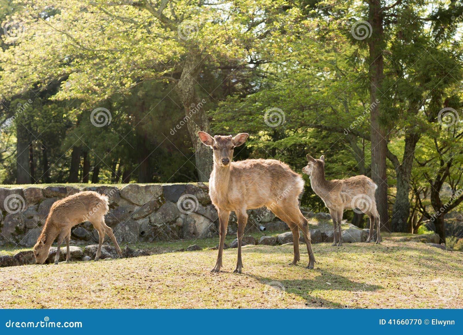 Олени Nara