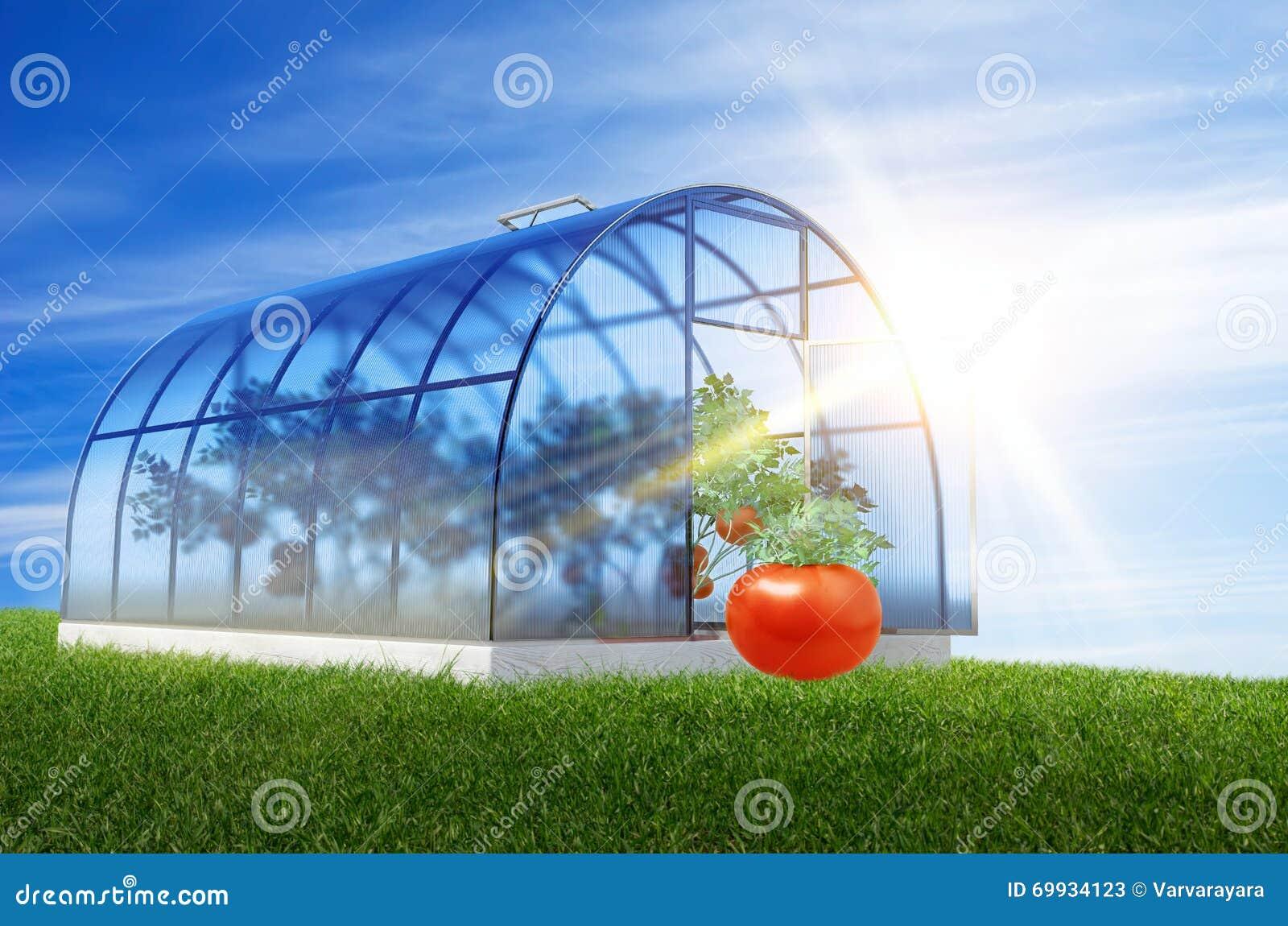 Один круглый парник с томатами