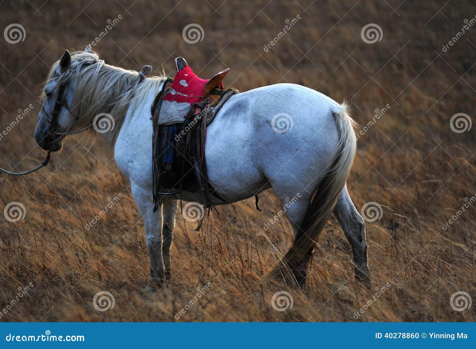 Одна лошадь