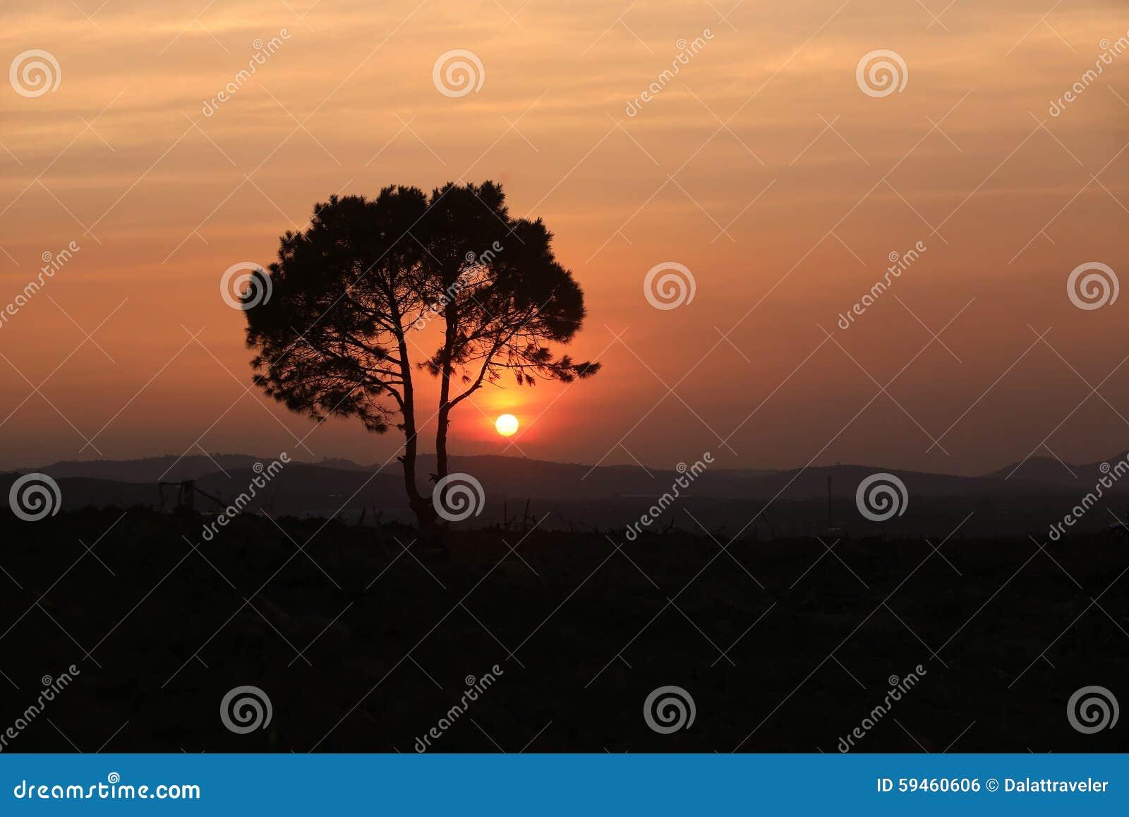 Одно дерево на лужке на заходе солнца
