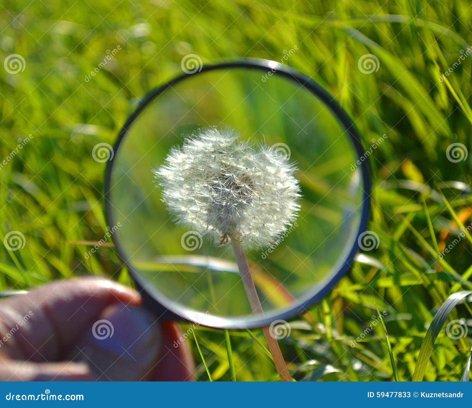 трава от паразитов в организме человека список