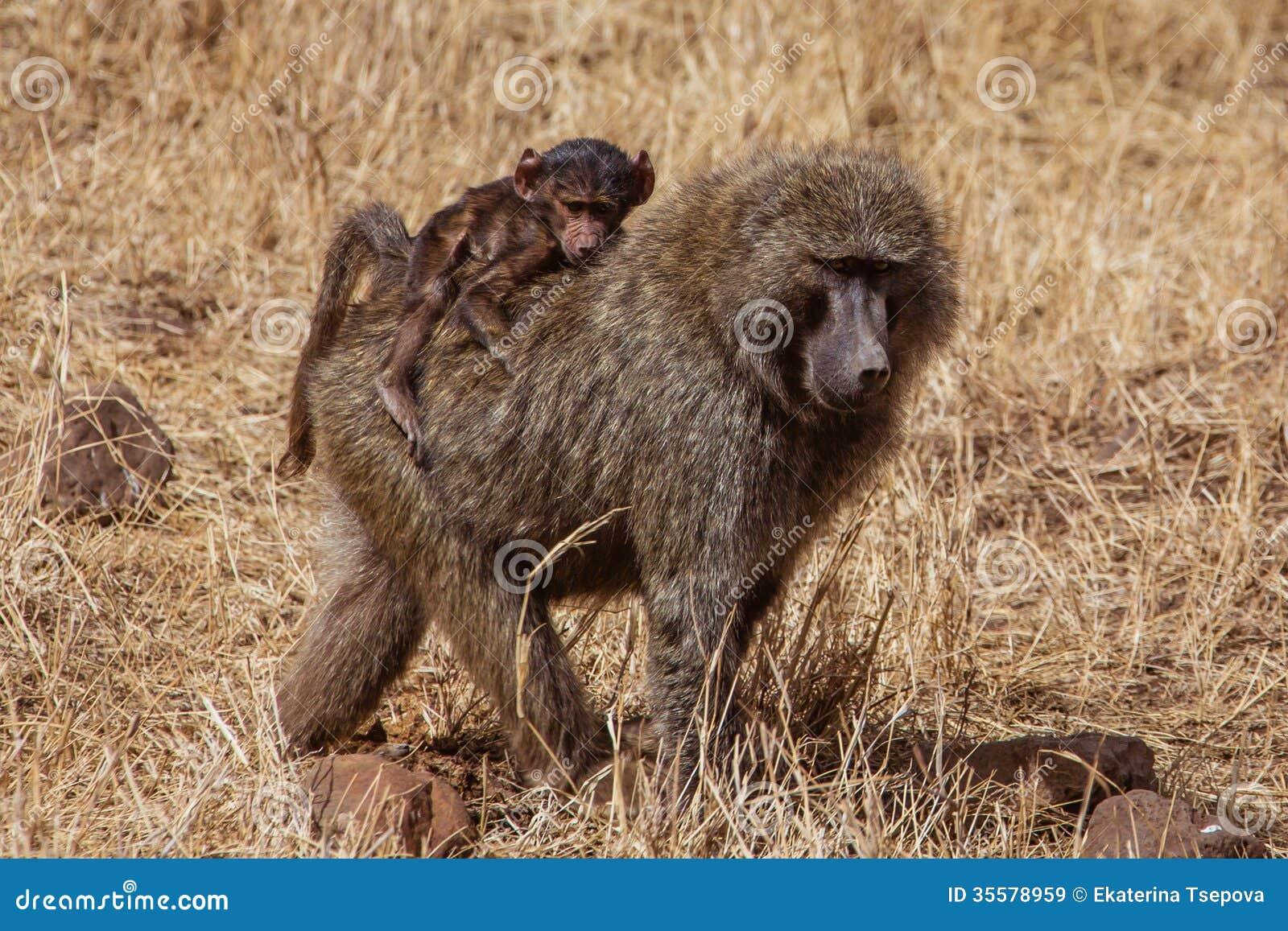 Павиан с младенцем