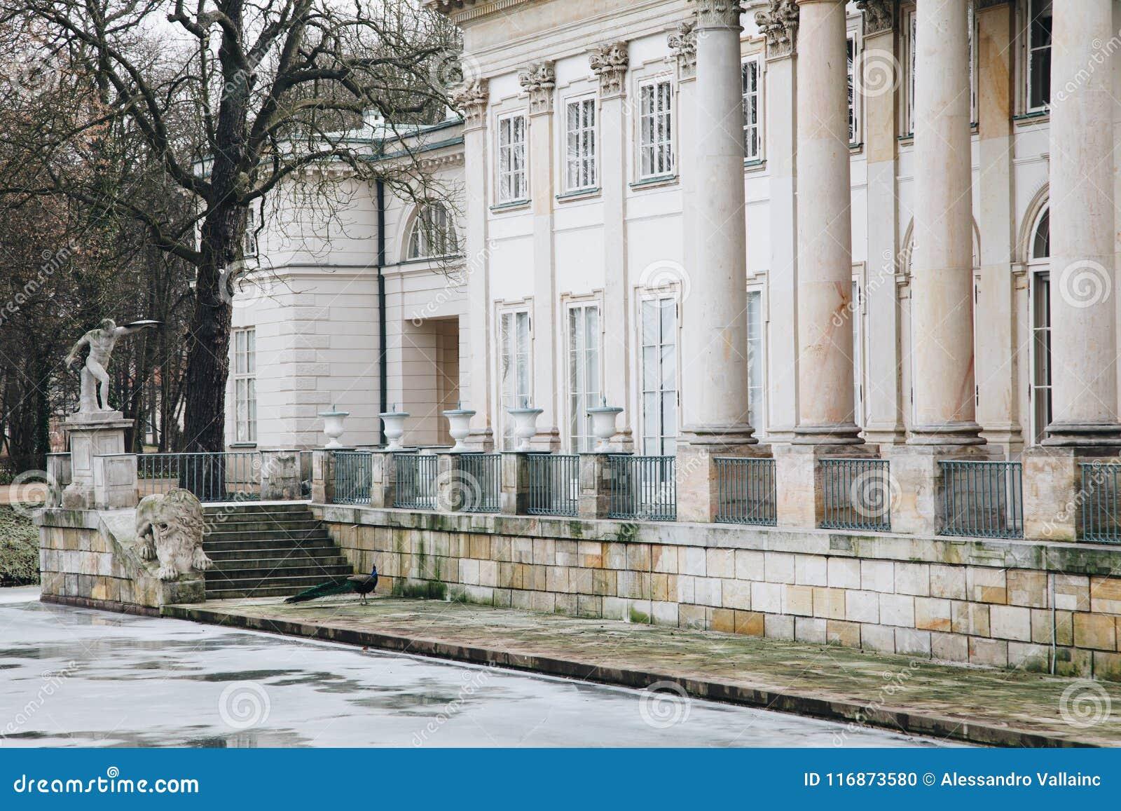 Павлин в Lazienki или королевские ванны паркуют в Варшаве в Польше