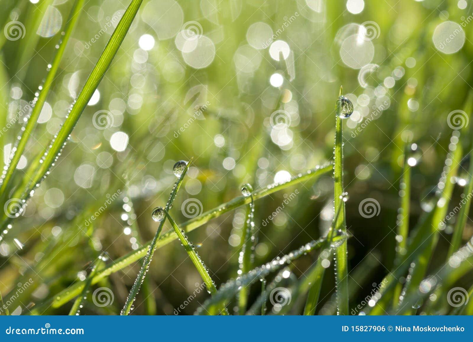 падает вода зеленого цвета травы