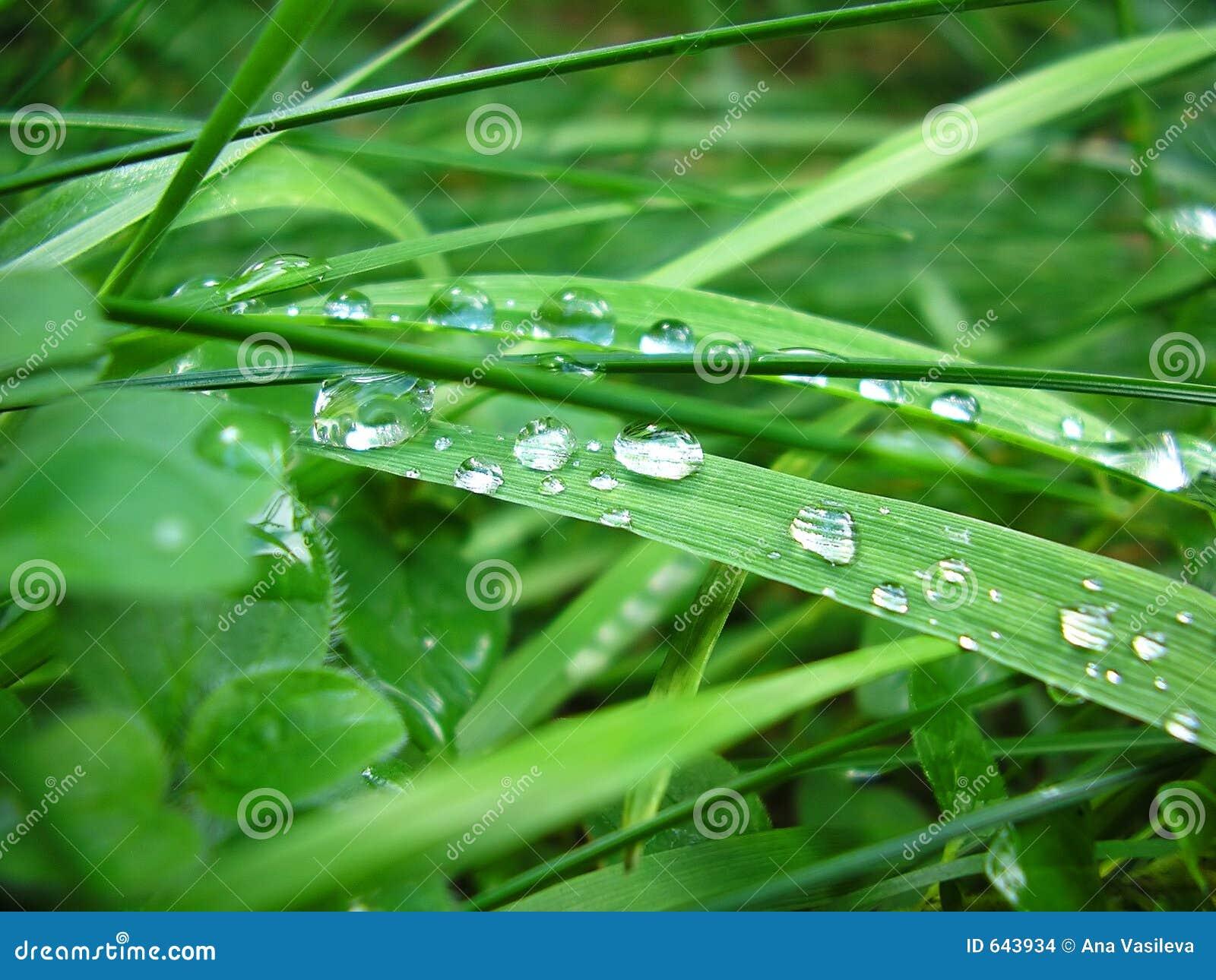 Download падает вода зеленого цвета травы Стоковое Фото - изображение насчитывающей чисто, трава: 643934