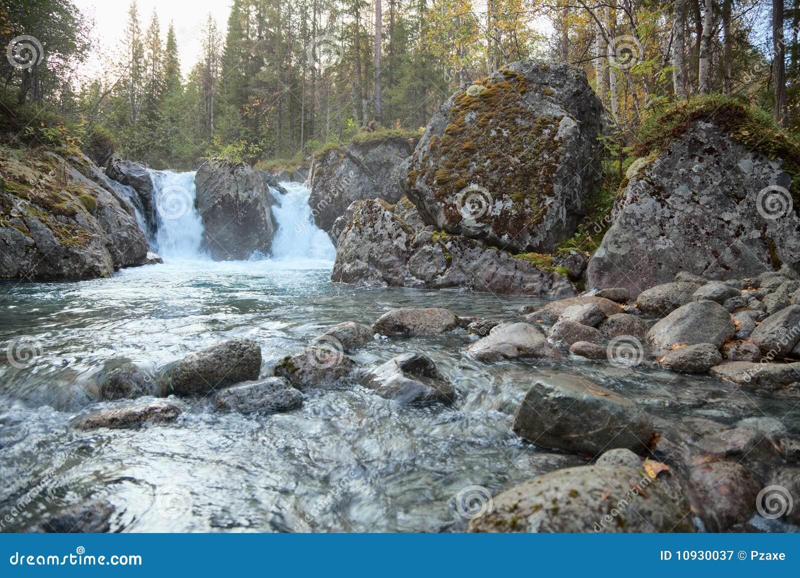 падает северная древесина потока