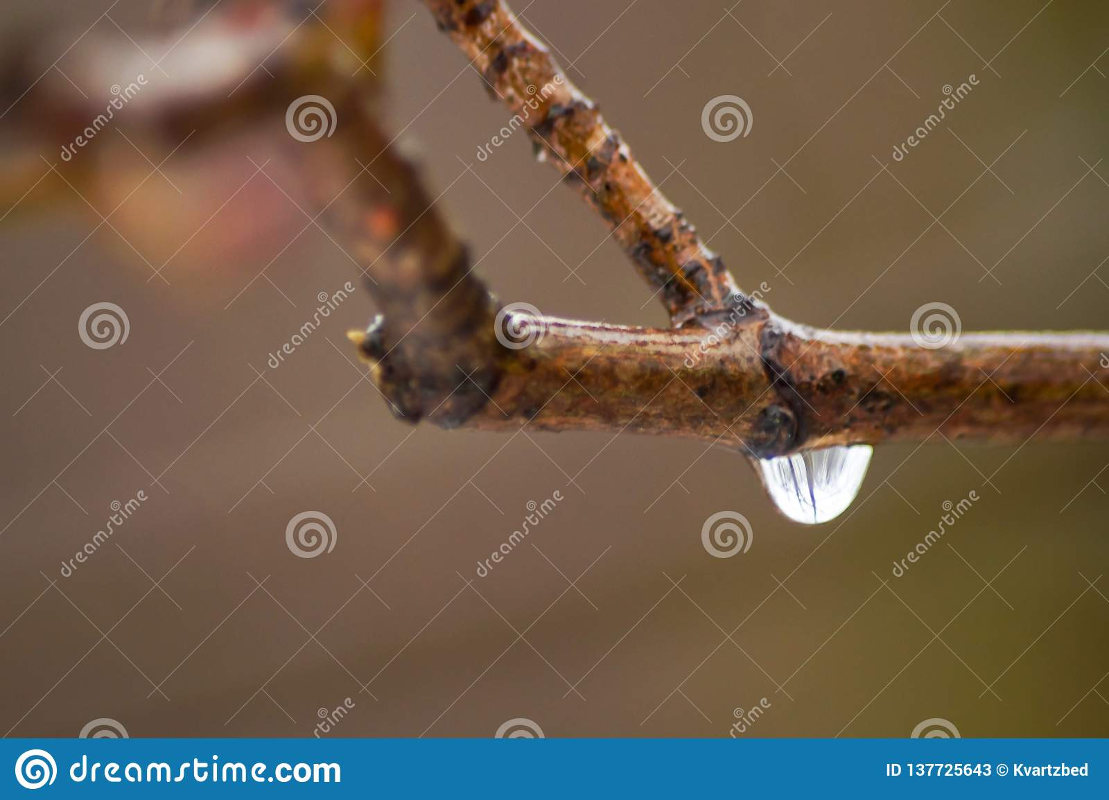 Падение воды на маленькой ветви