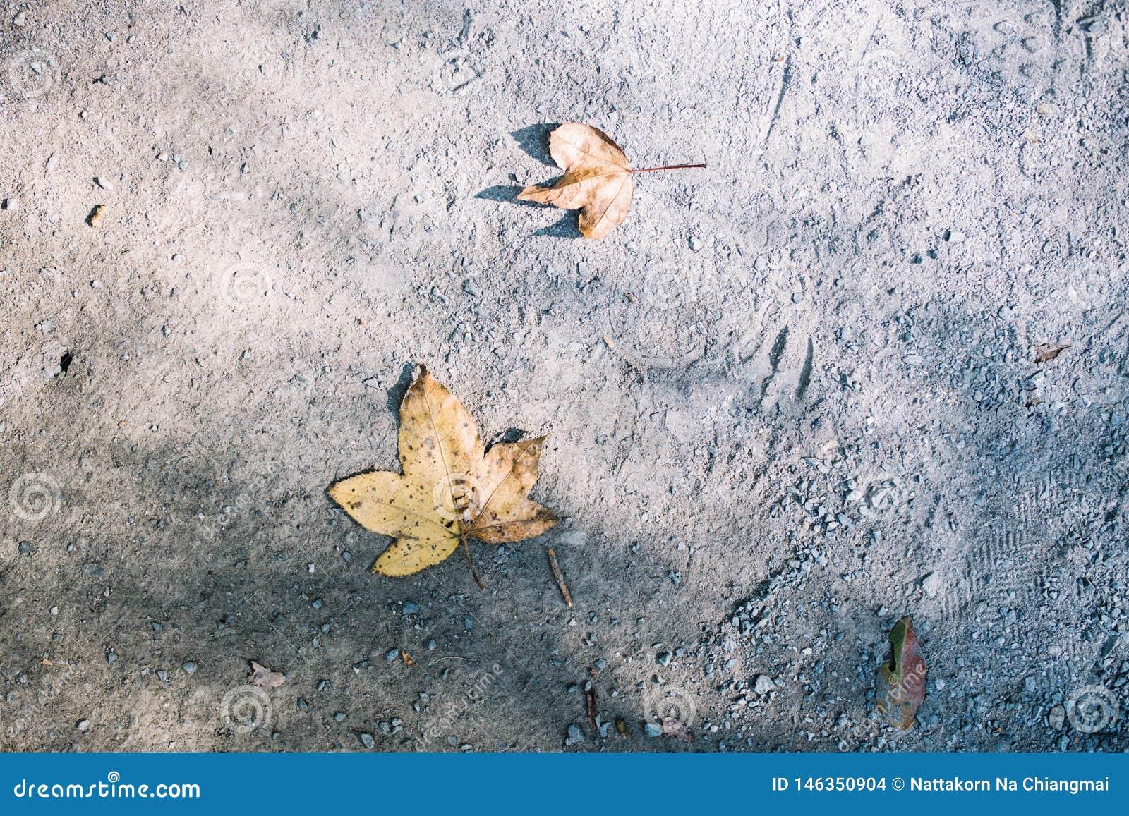 Падение кленового листа на землю во время осени в Сеуле, Южной Корее