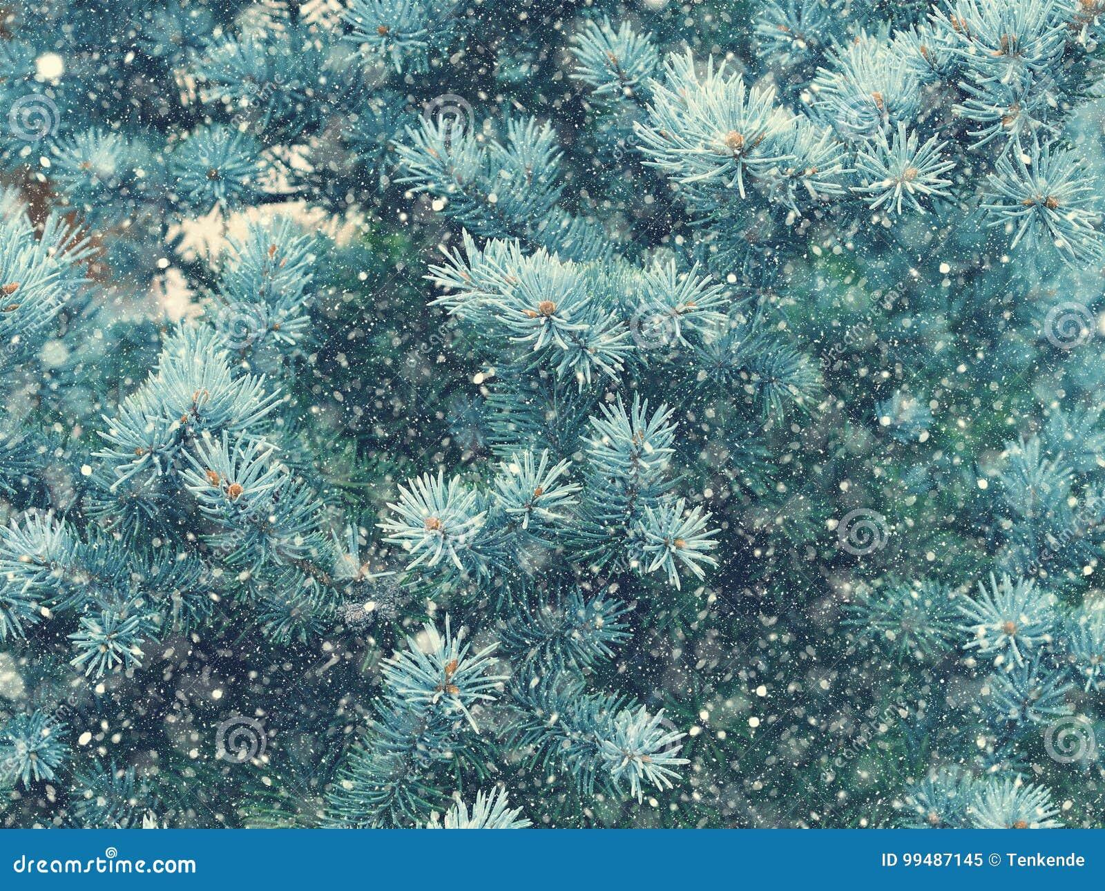 Падение снега в волшебство рождества леса зимы