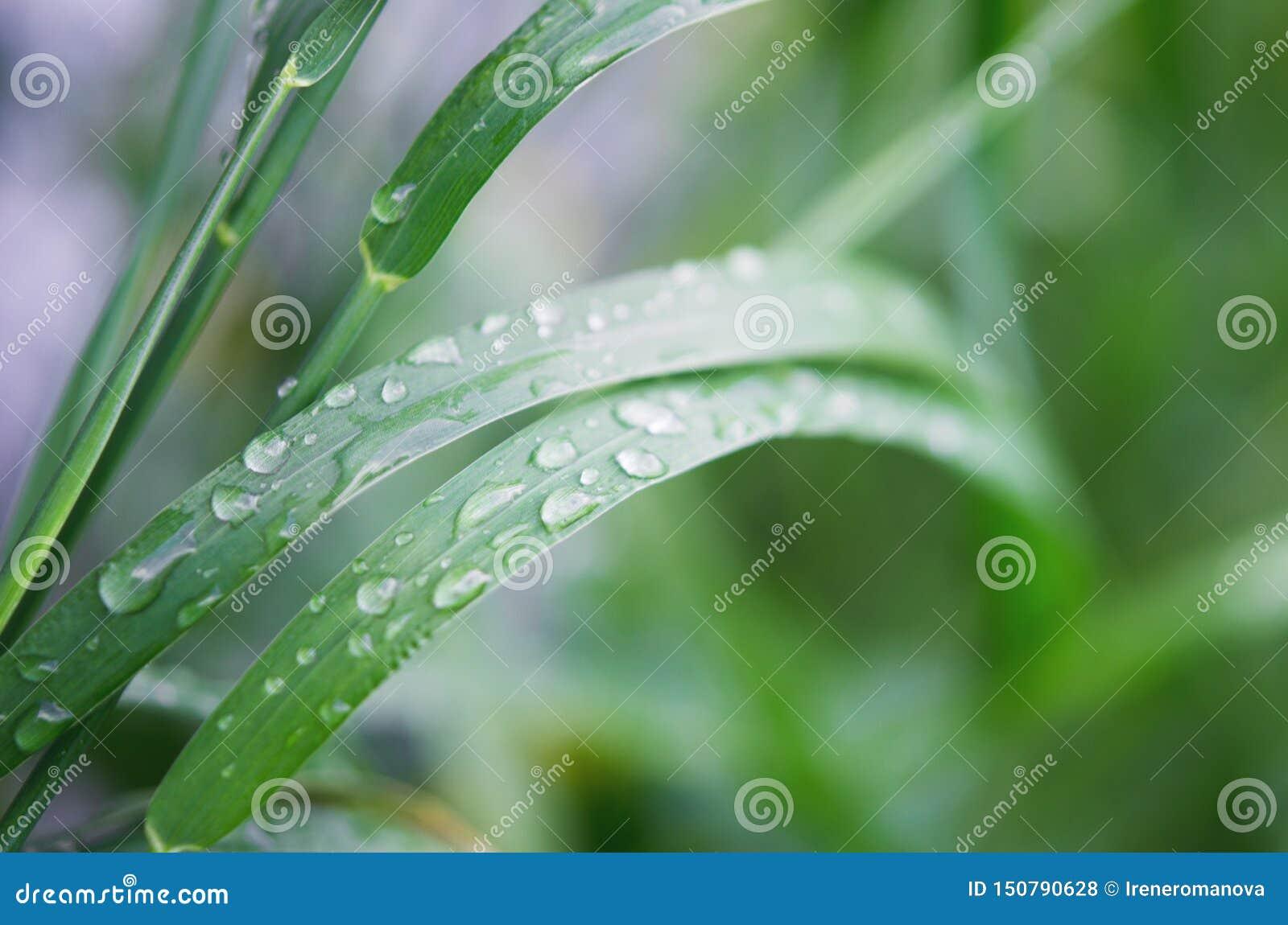 Падения воды на зеленой траве r