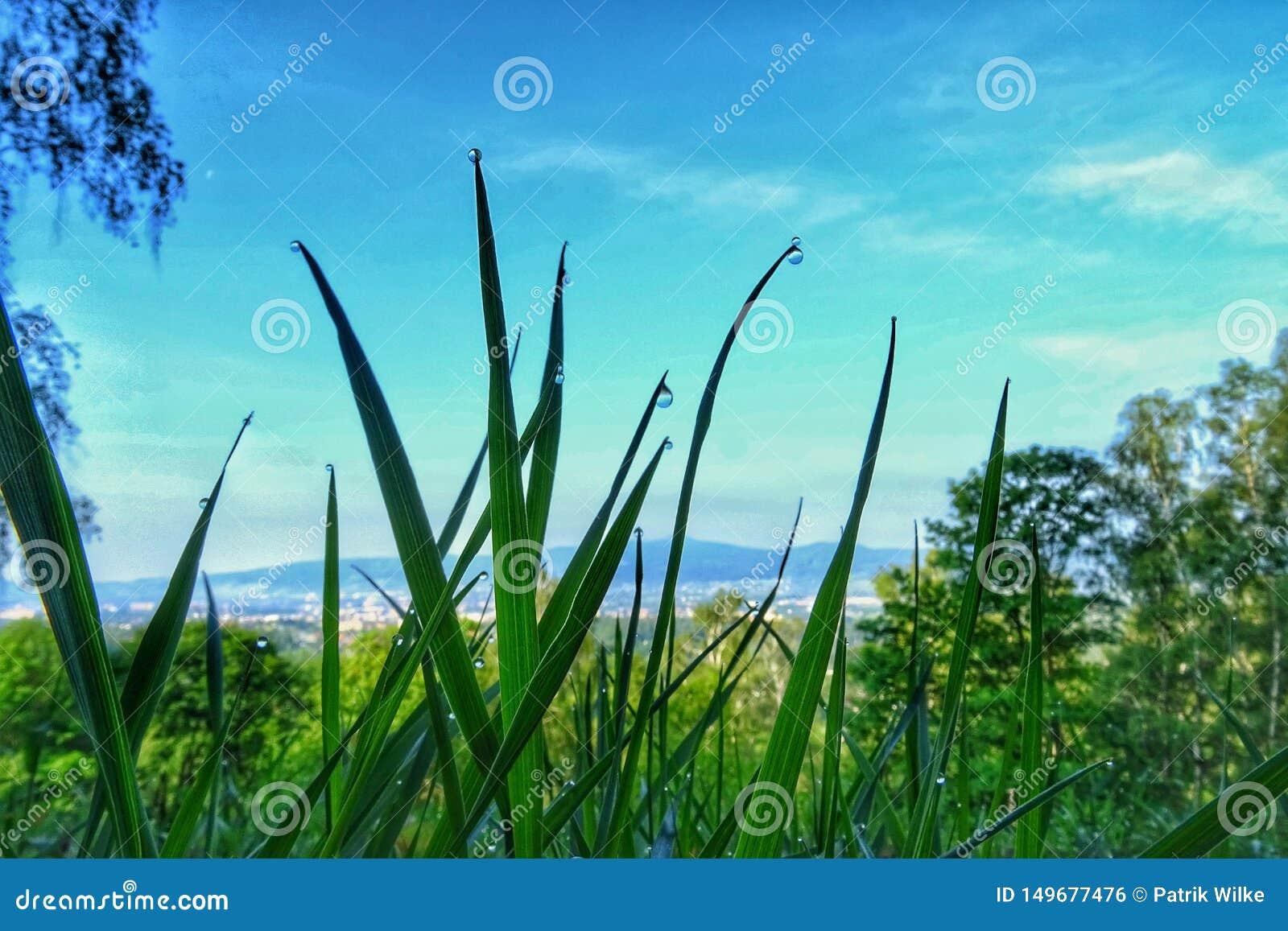 Падения росы на траве одно утро