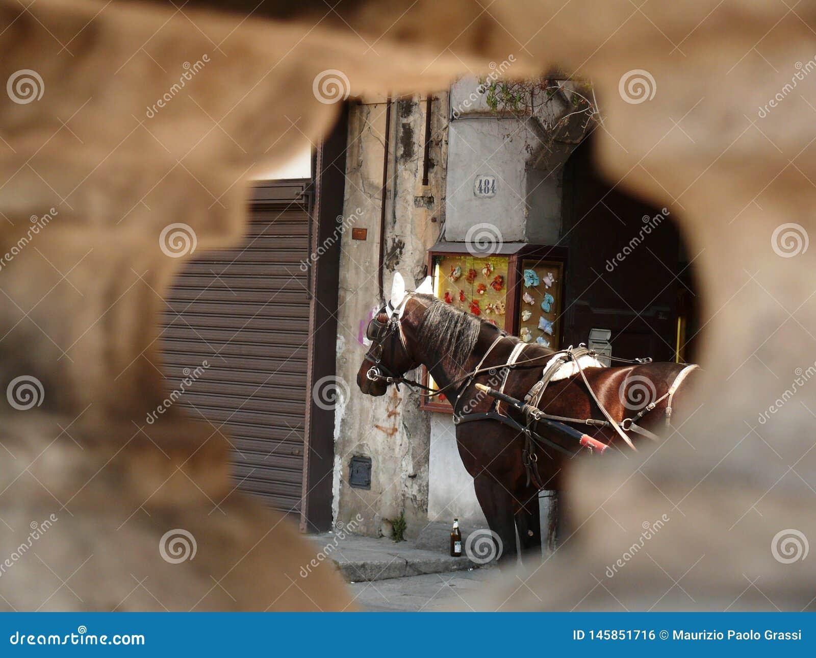 Палермо, Сицилия, Италия Закройте вверх лошади увиденной от отверстия