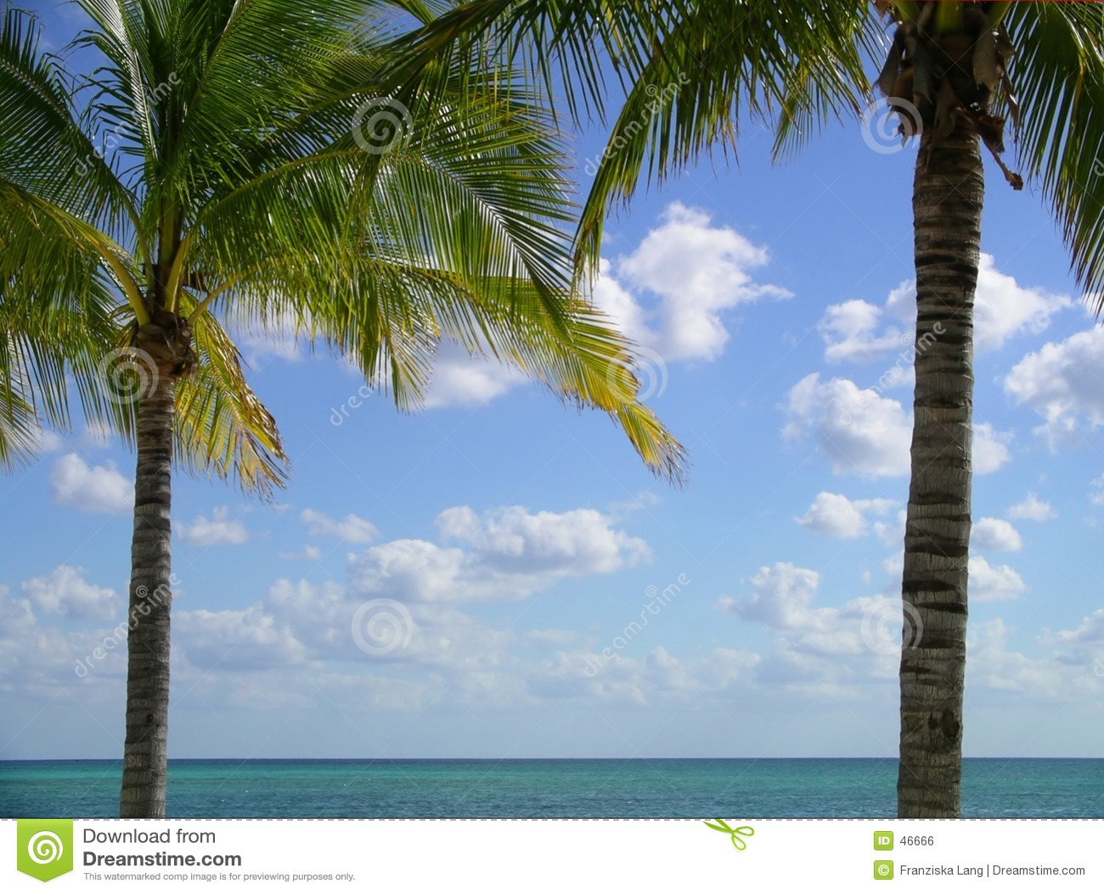 пальма рамки