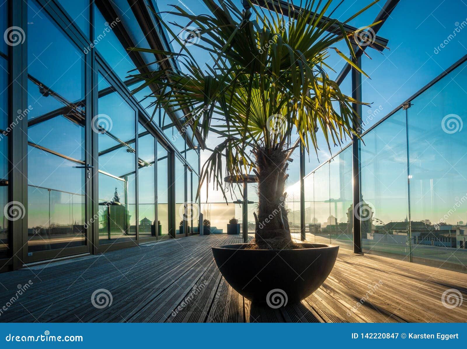 Пальма стоит на террасе на крыше