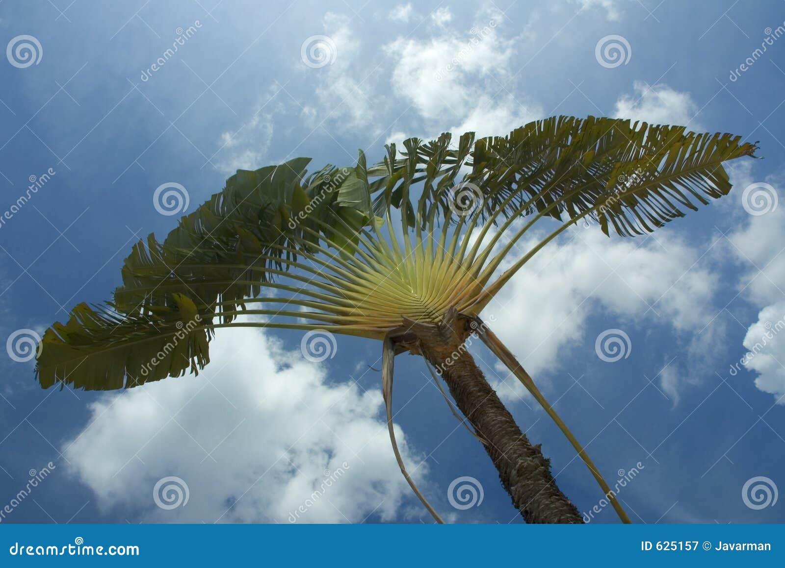 Download пальма стоковое изображение. изображение насчитывающей океан - 625157