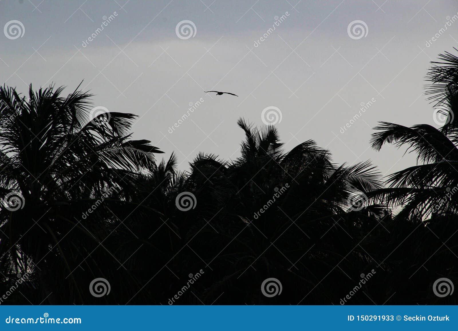 Пальмы и белый песчаный пляж на заходе солнца в Caribbeans