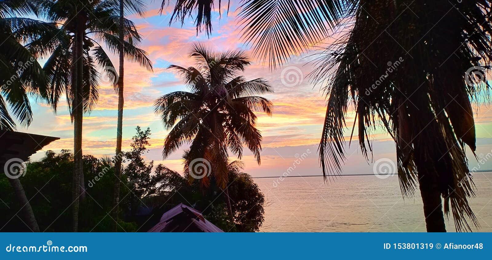 Пальмы кокоса около водяной поверхности