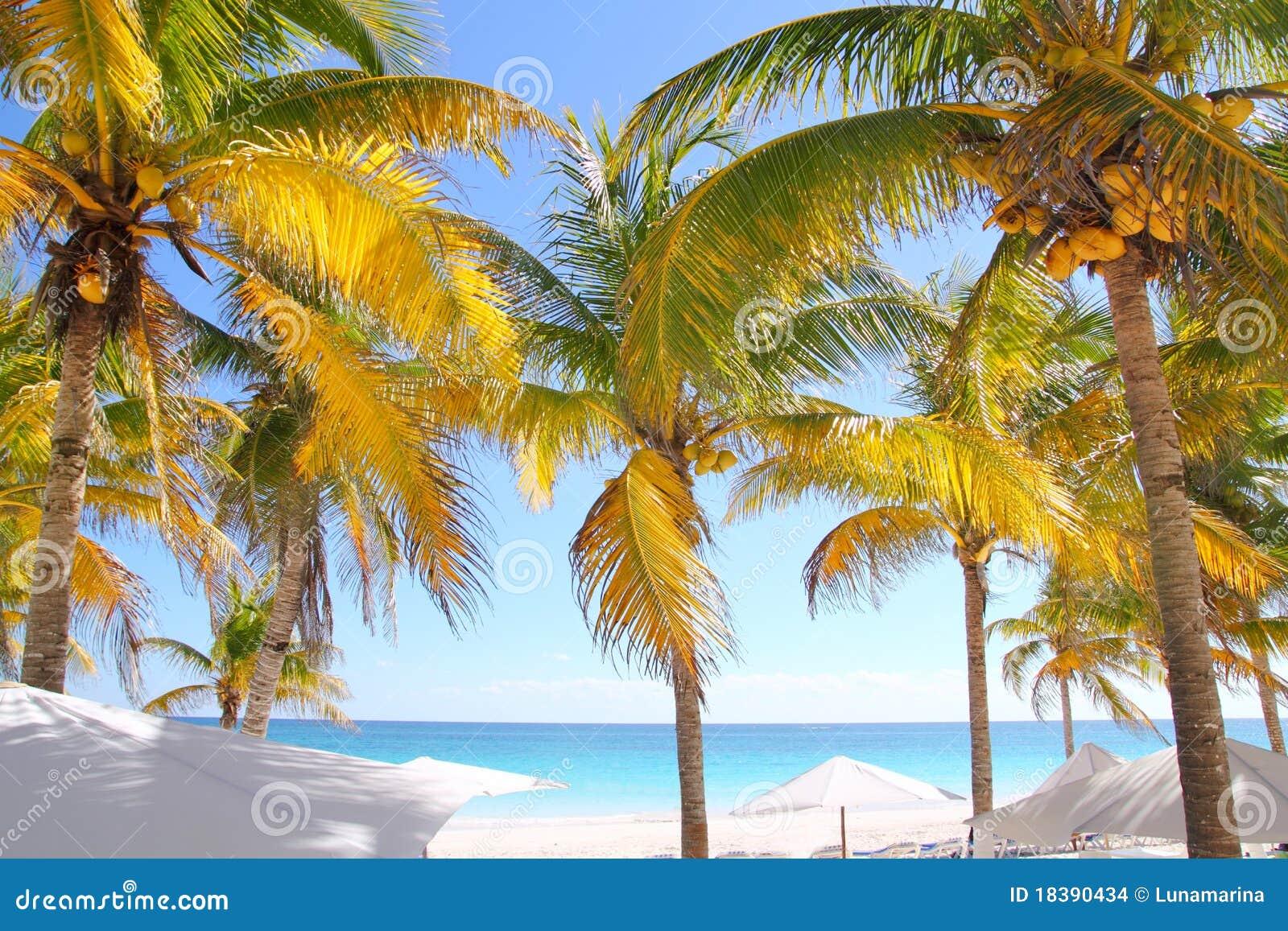 пальмы кокоса пляжа карибские тропические