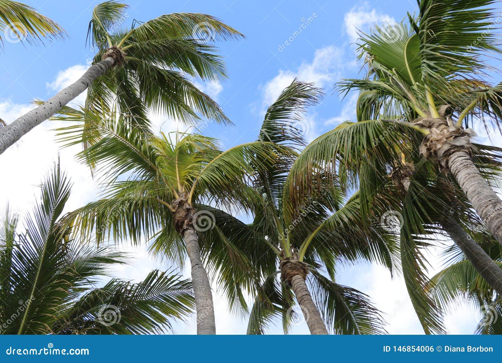 Пальмы на голубом и белом небе