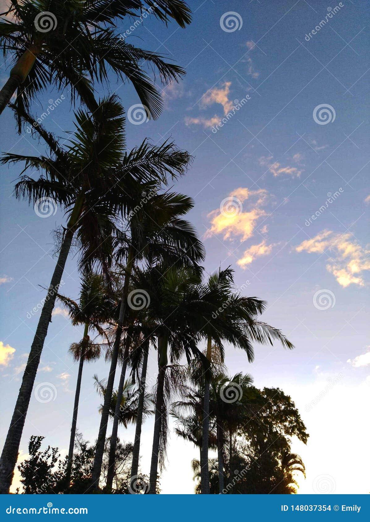 Пальмы на заходе солнца