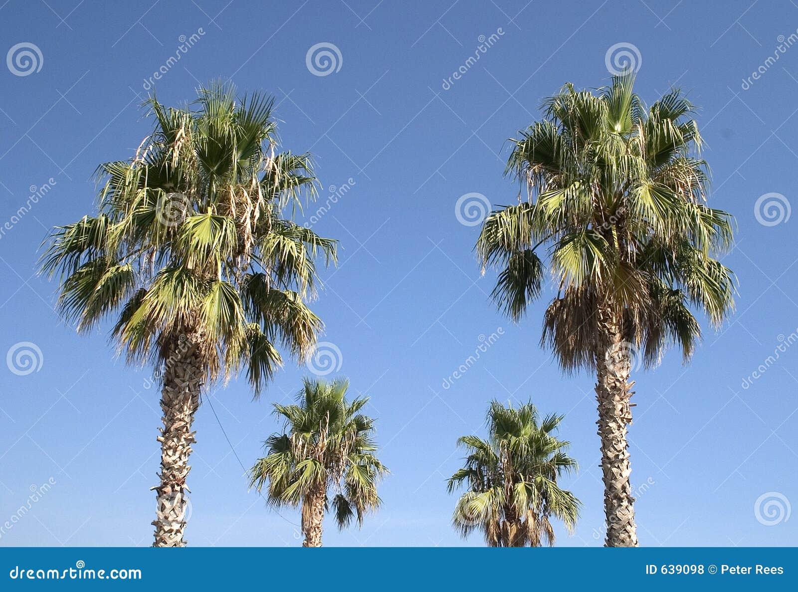 Download пальмы стоковое фото. изображение насчитывающей ясность - 639098