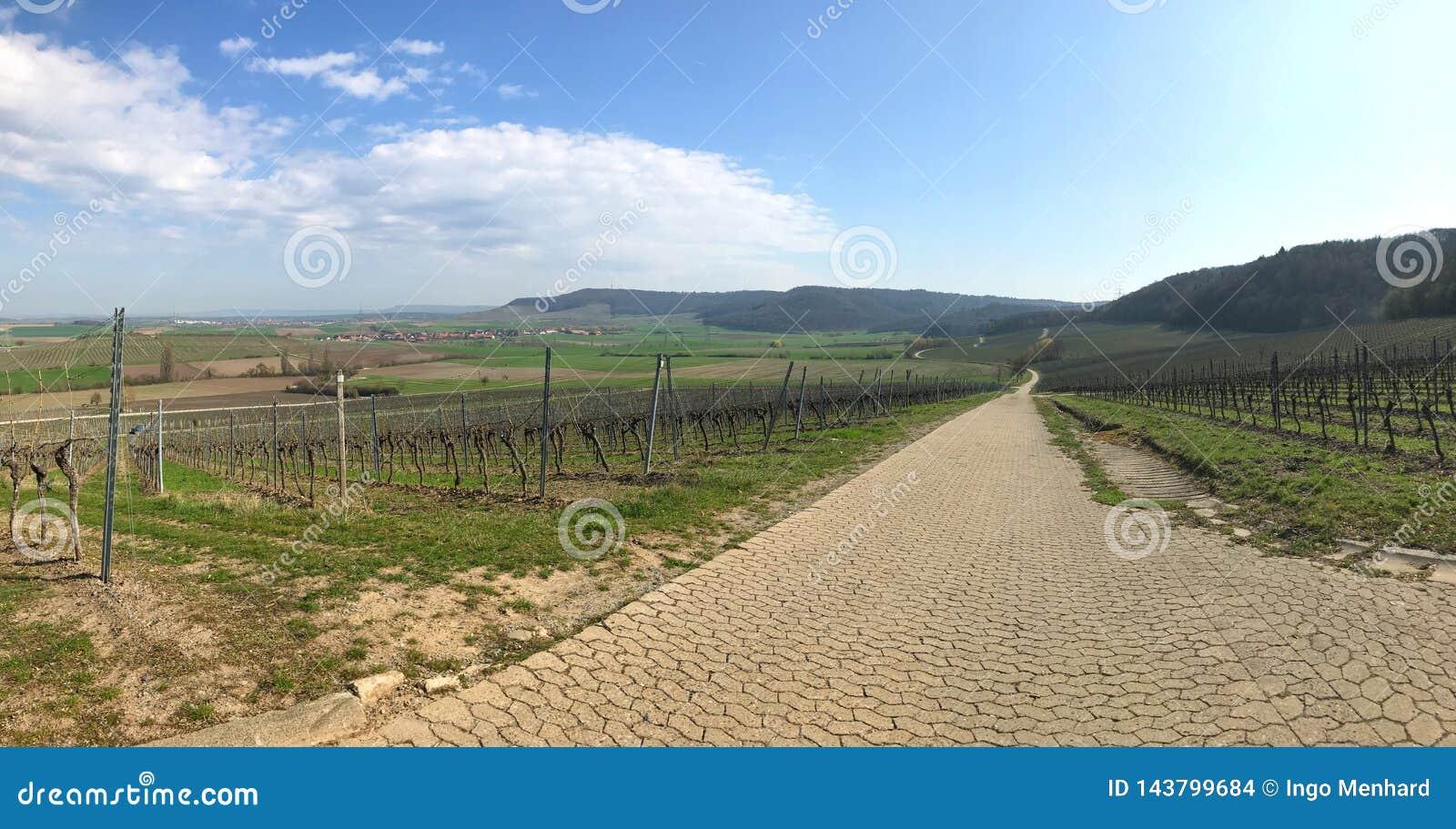 Панорама виноградника в Баварии в предыдущей весне
