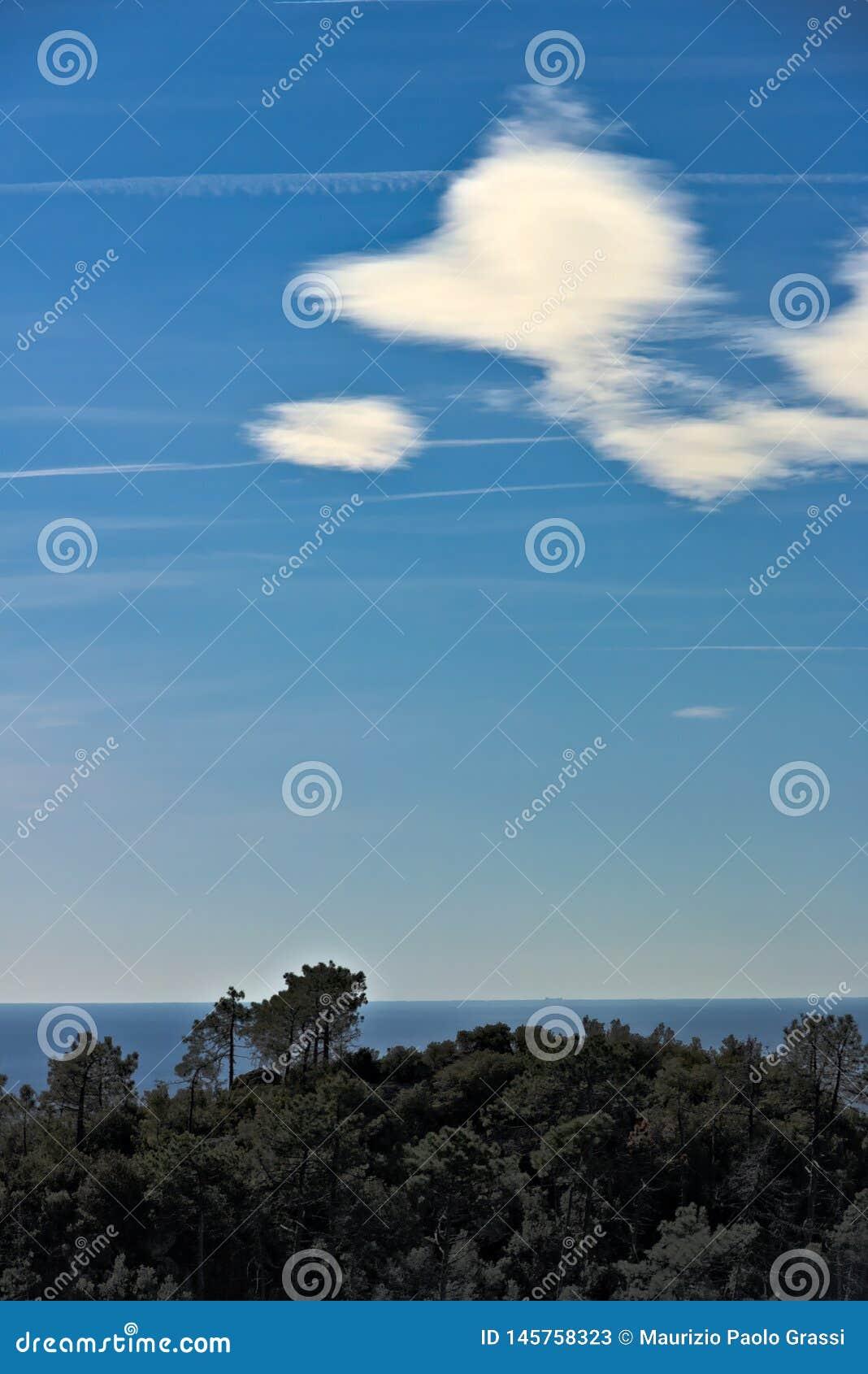 Панорама моря Cinque Terre Деревья, море, небо в панораме Cinque Terre Grosso Monte Провинция Ла Spezia