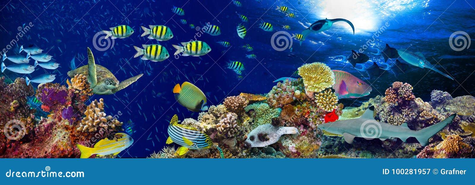 Панорама подводного ландшафта кораллового рифа широкая