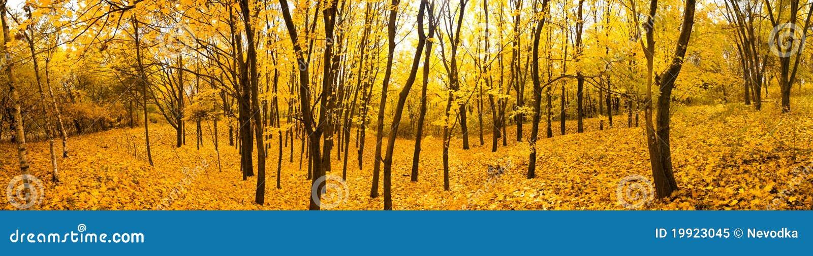 панорама пущи осени