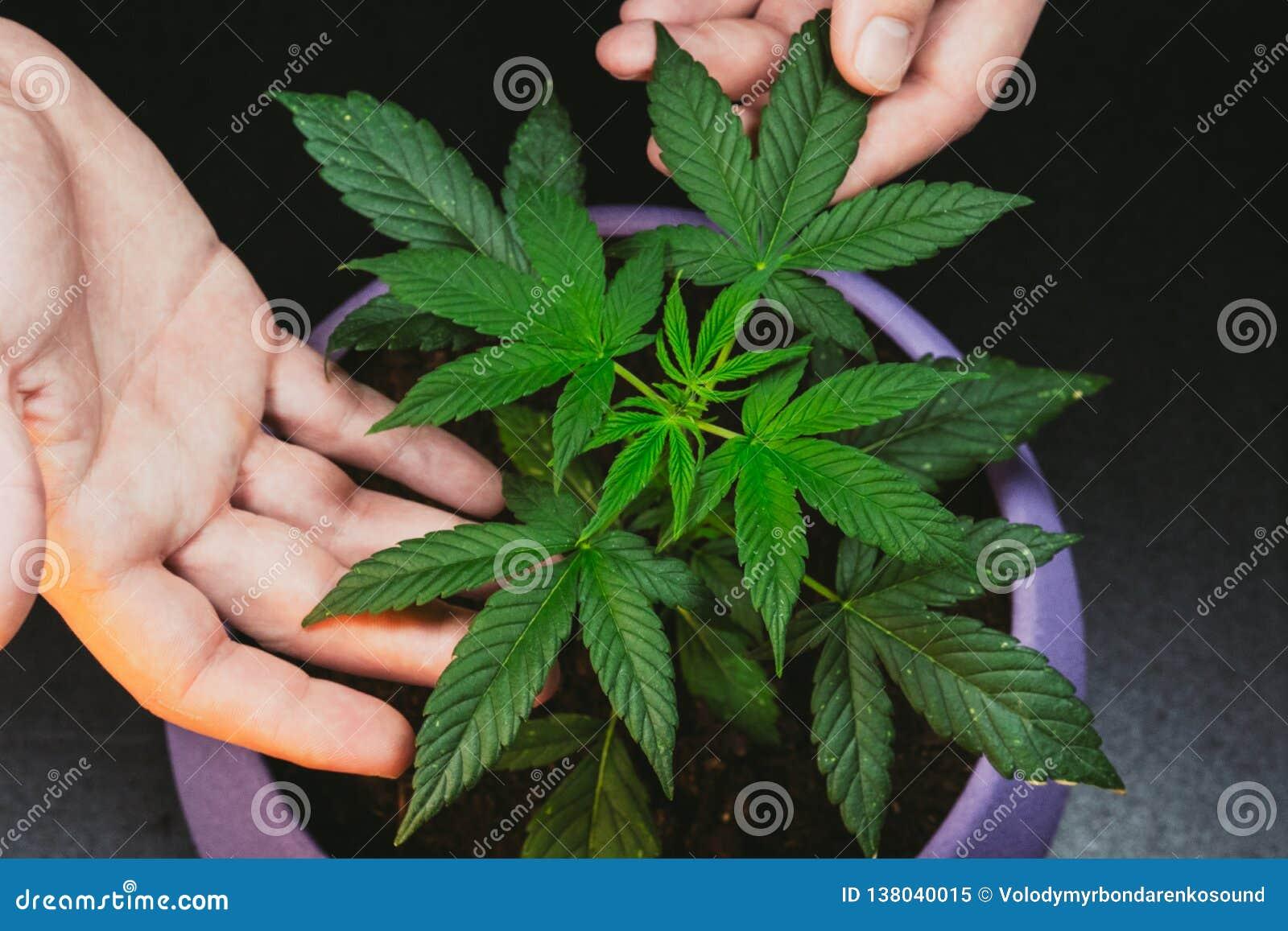 Фото парень и марихуана марихуана пнг