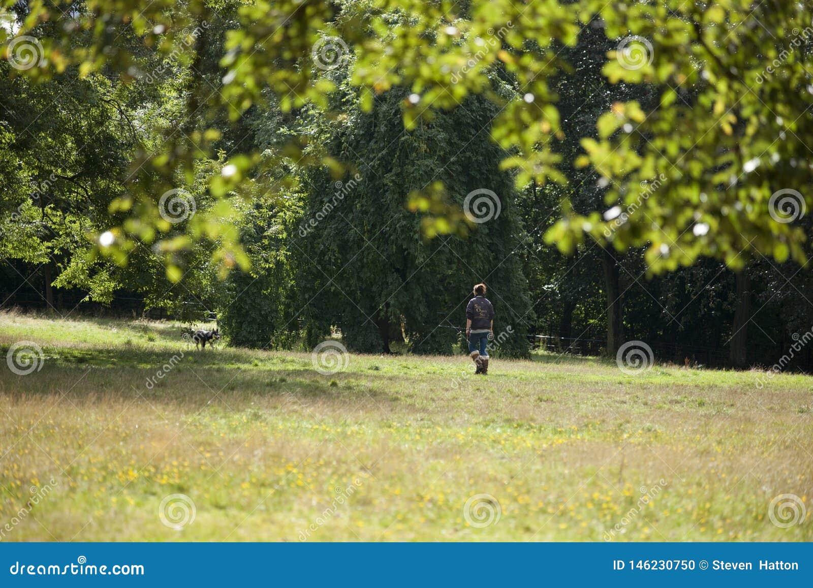 Парк, Глазго, Шотландия, Великобритания, сентябрь 2013, parkland и деревья Kelvingrove в парке Kelvingrove