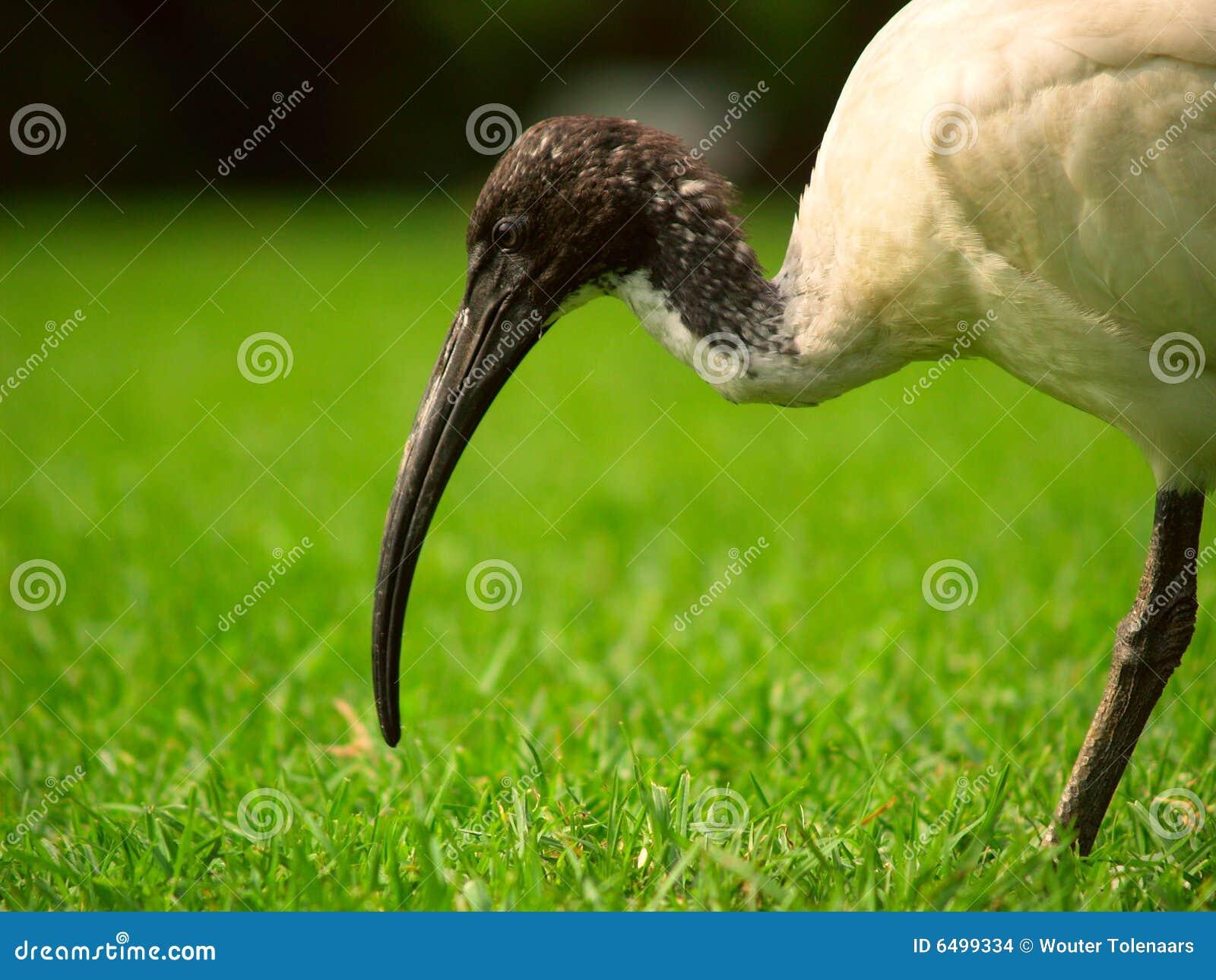 парк ibis священнейший